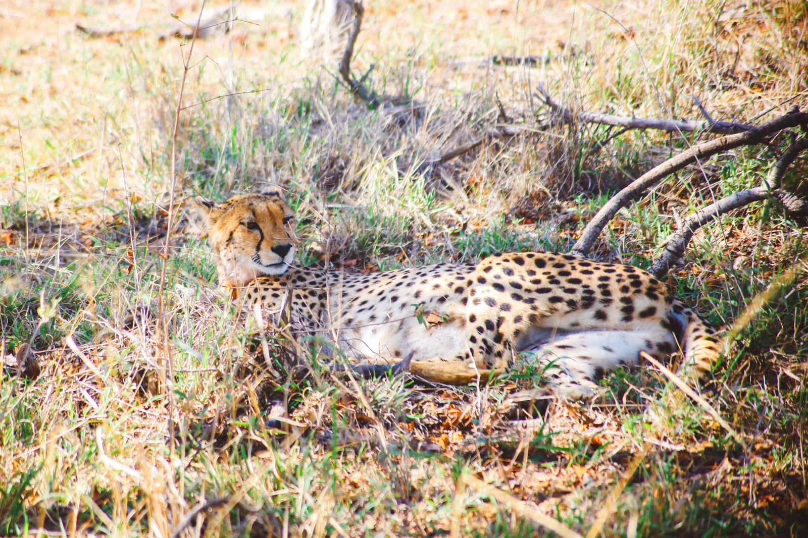 Sunrise Till Sunset - A 24 Hour South African Safari Diary (23)