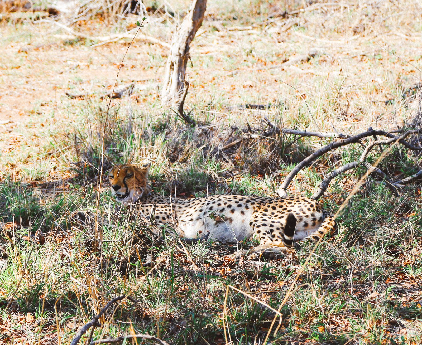 Sunrise Till Sunset - A 24 Hour South African Safari Diary (25)