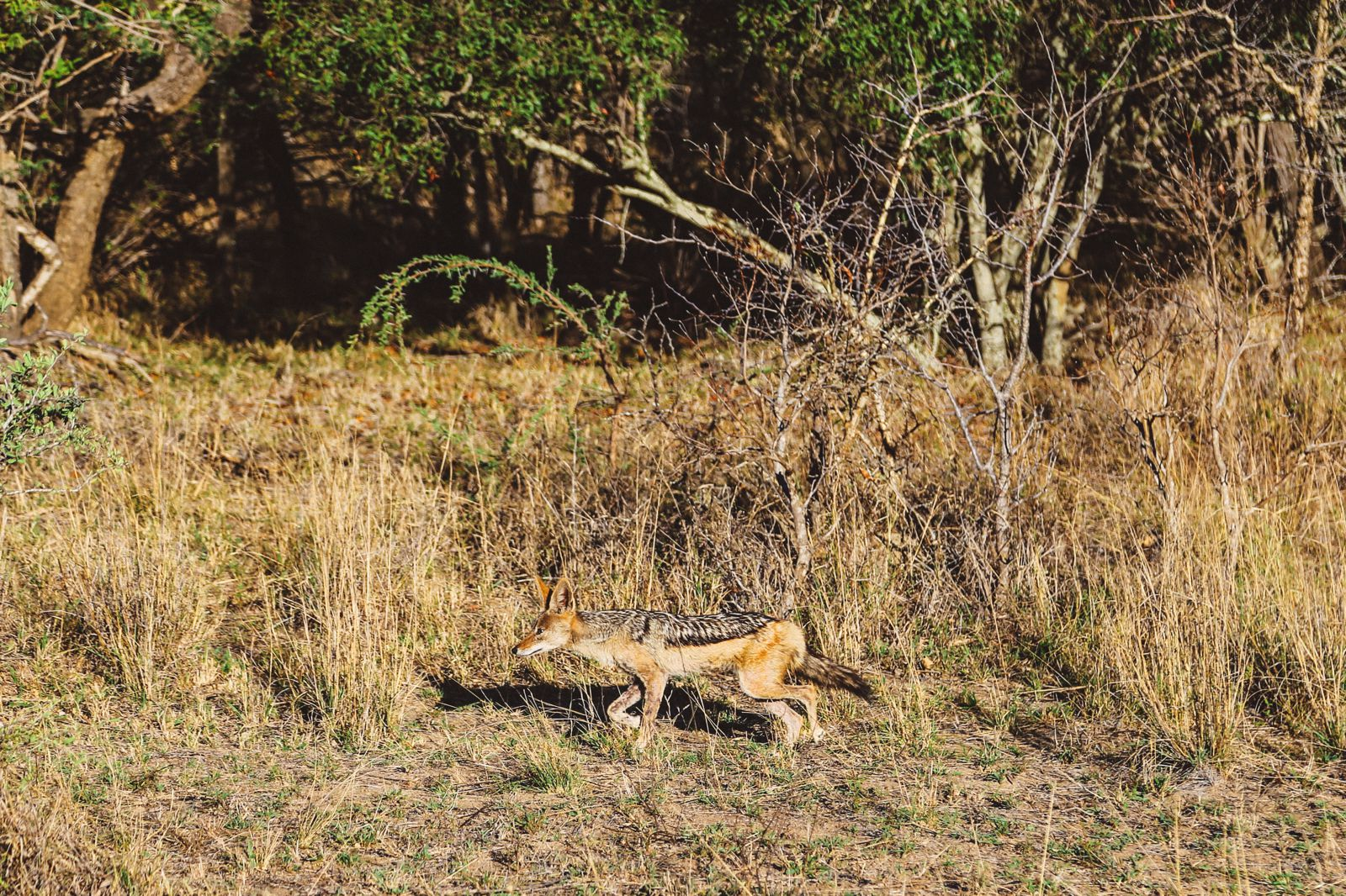 Sunrise Till Sunset - A 24 Hour South African Safari Diary (40)