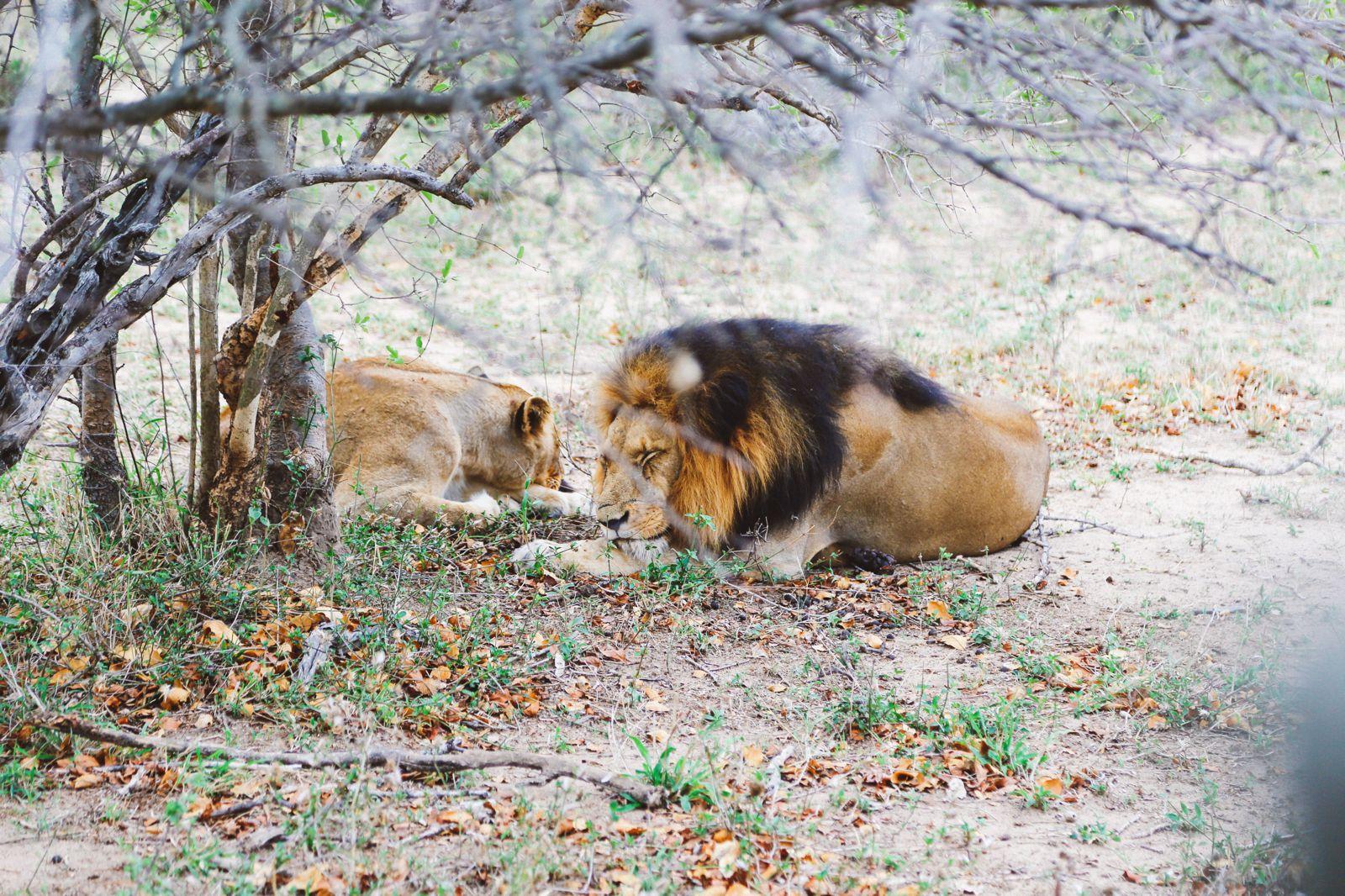 Jungle Love, South Africa (45)