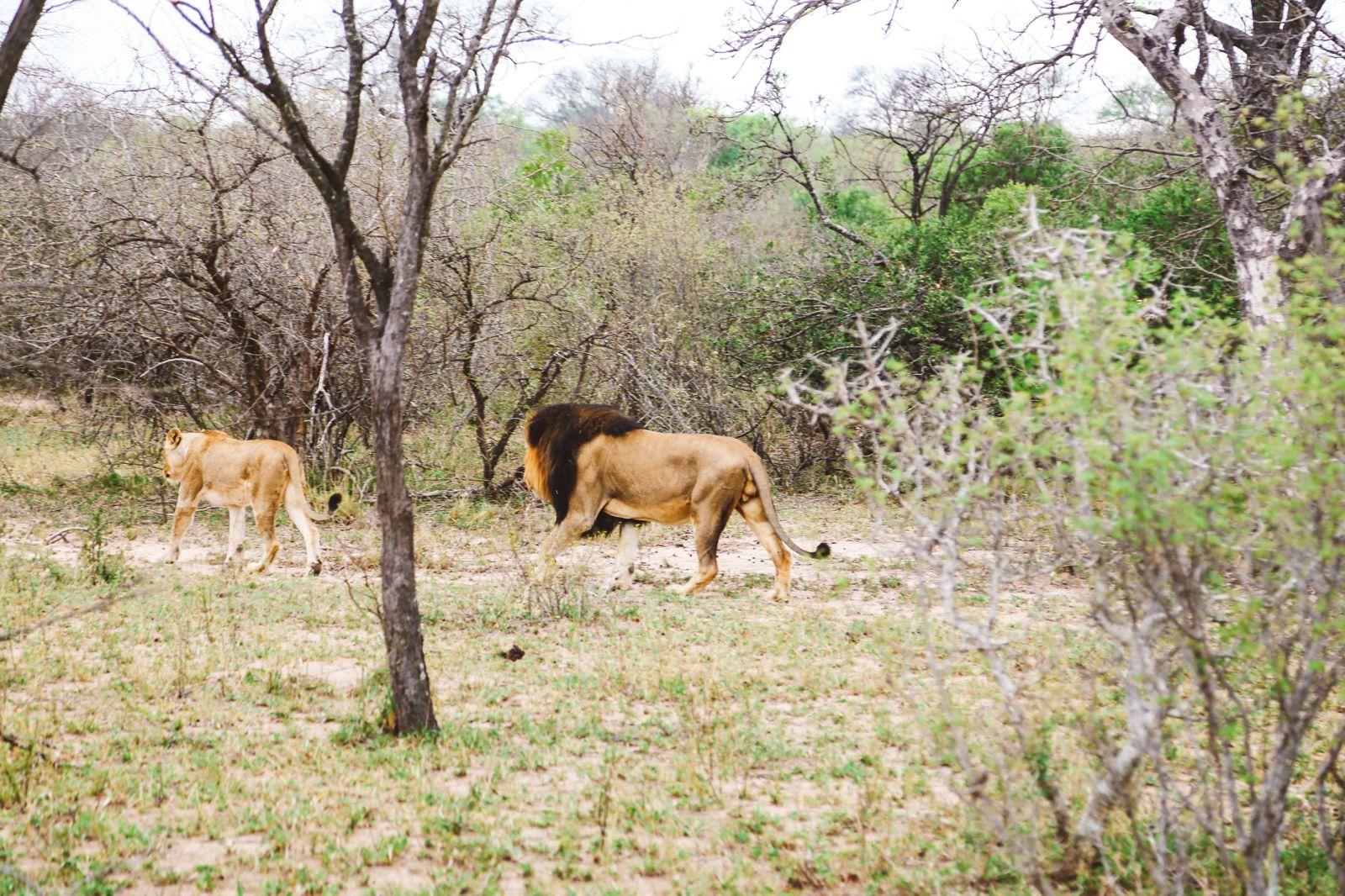 Jungle Love, South Africa (44)