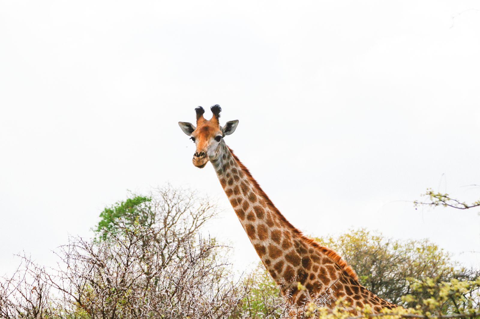 Jungle Love, South Africa (36)
