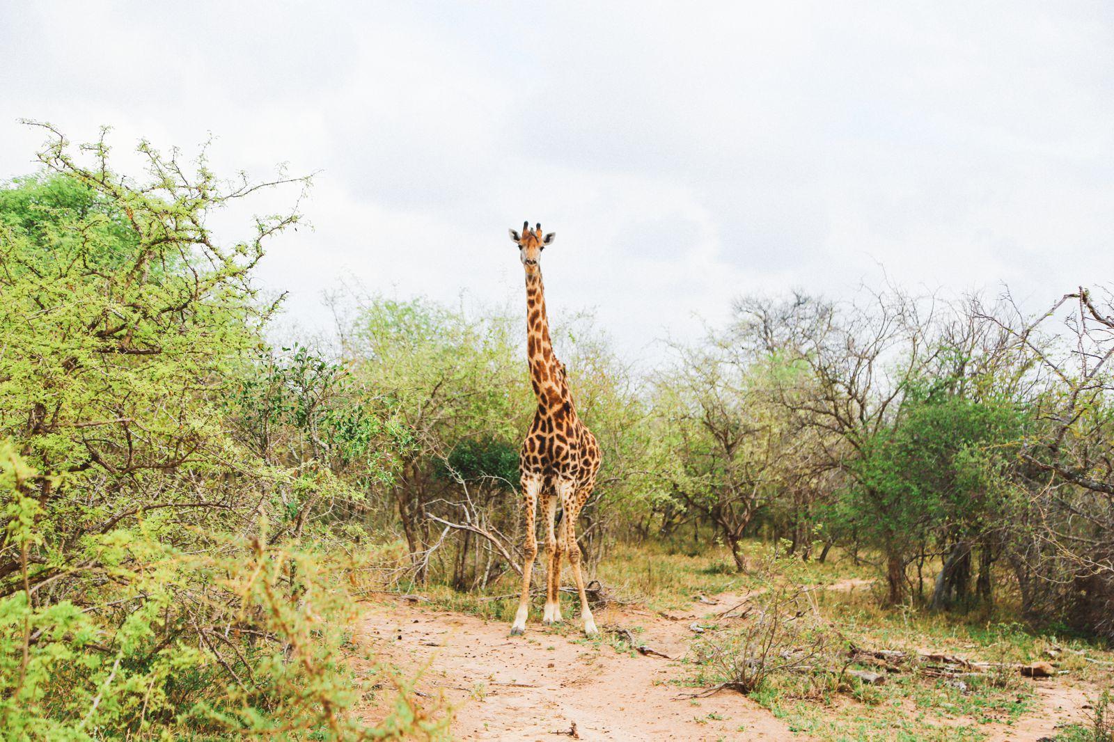 Jungle Love, South Africa (35)