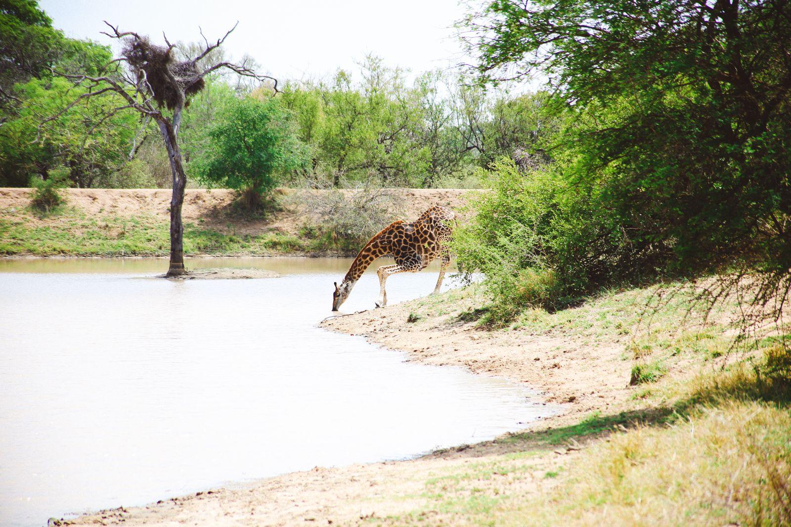 Jungle Love, South Africa (28)