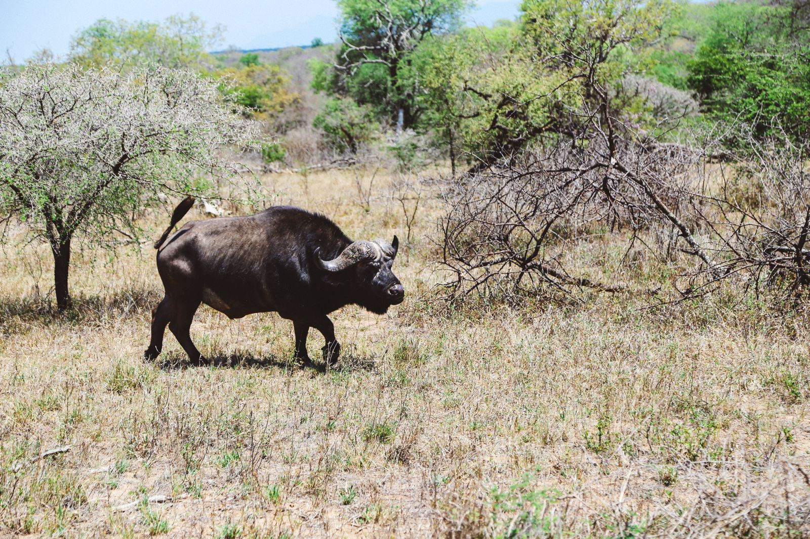 Jungle Love, South Africa (14)