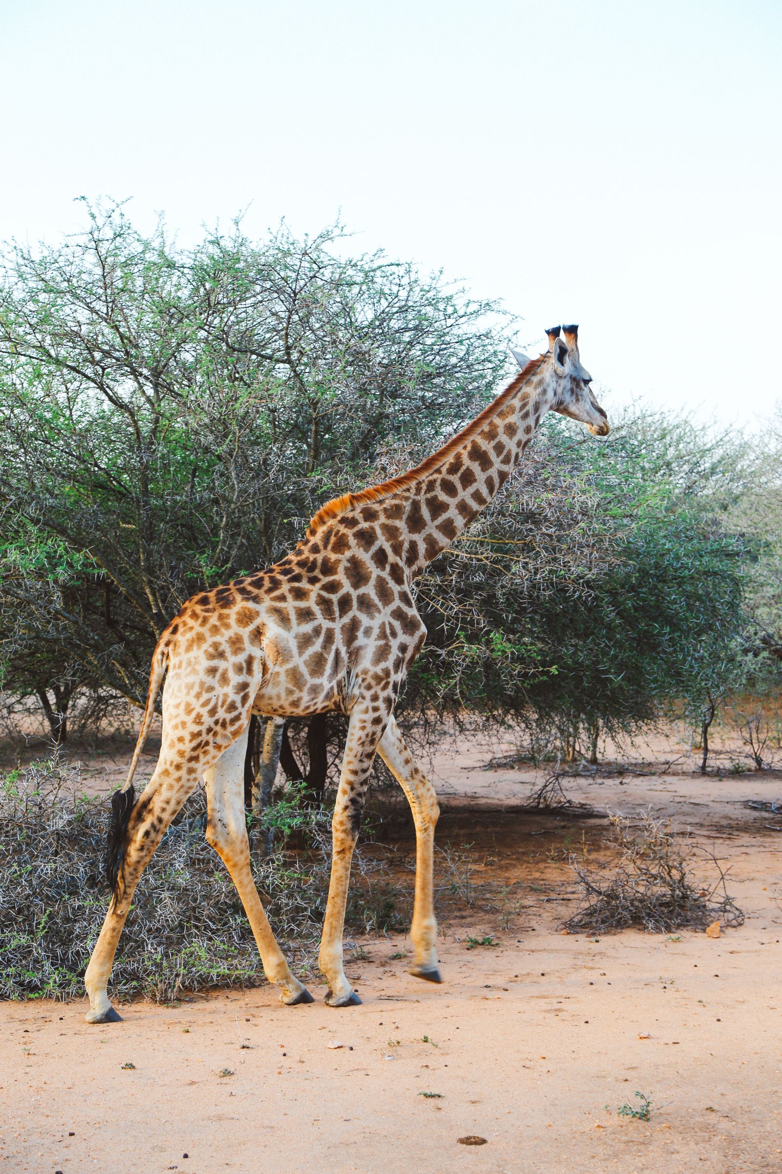 Jungle Love, South Africa (12)
