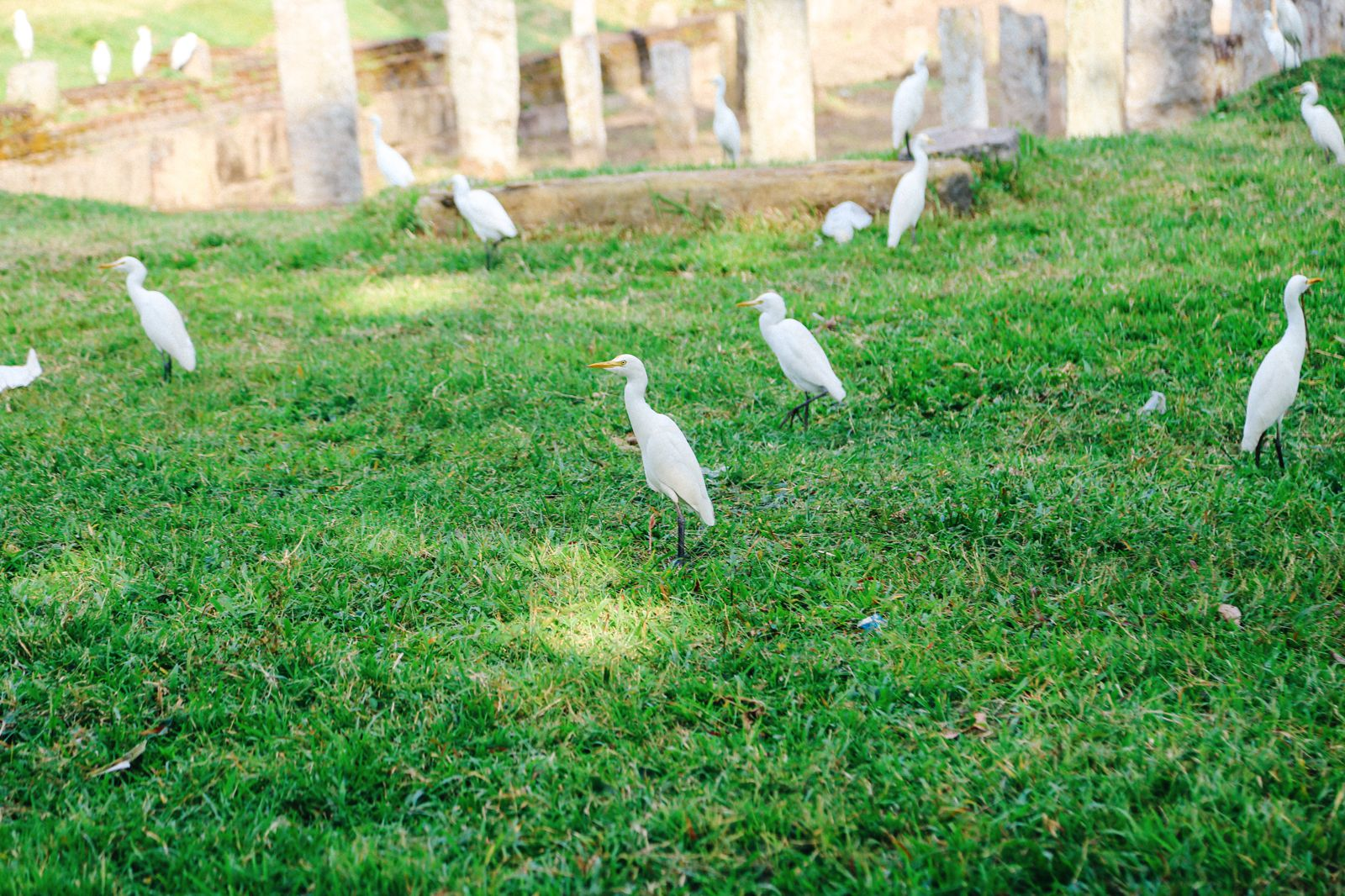 The Ancient City Of Anuradhapura, Sri Lanka (13)