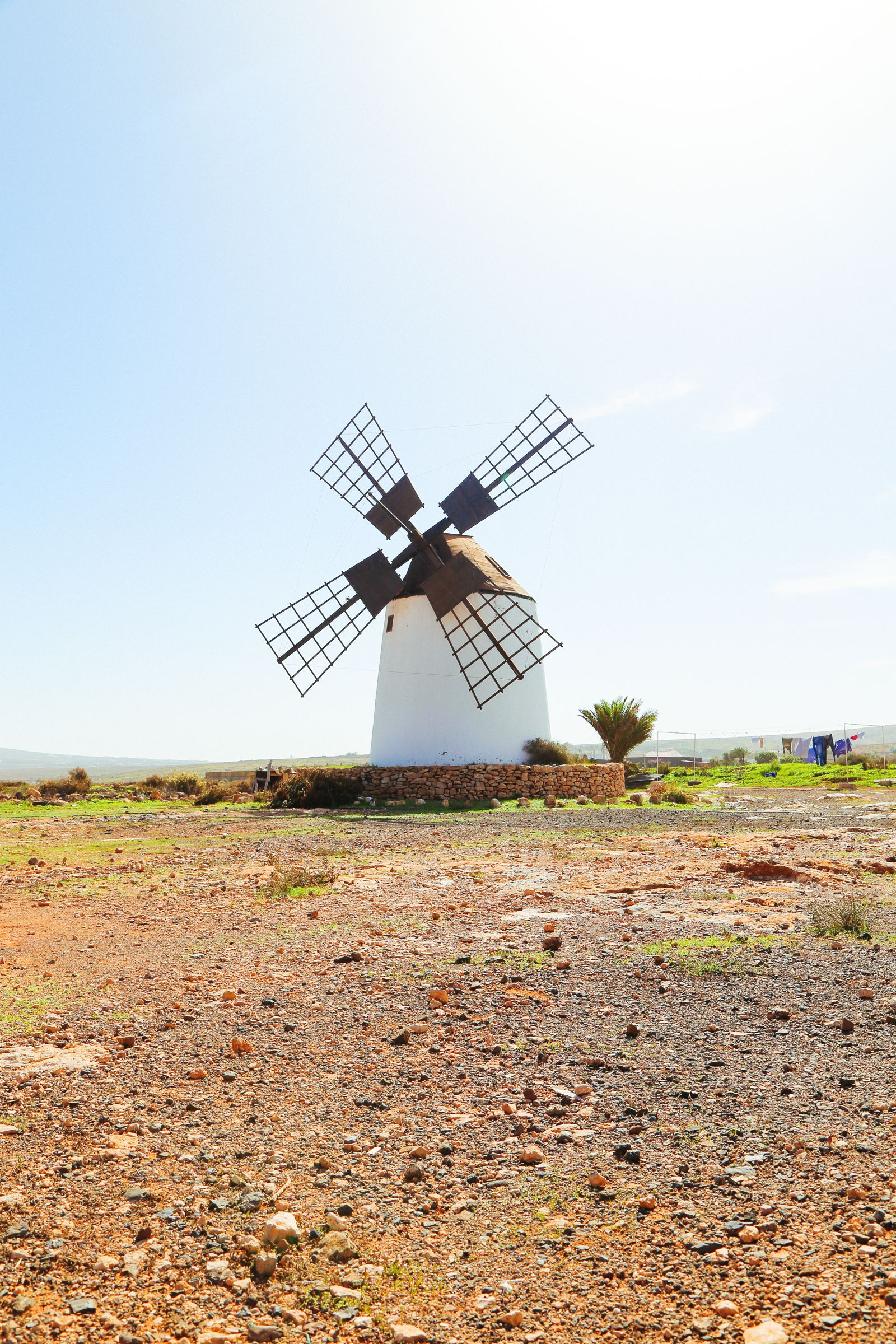 Sand-Dunes, Windmills And Cute Little Piglets In Fuerteventura, Canary Island, Spain (9)