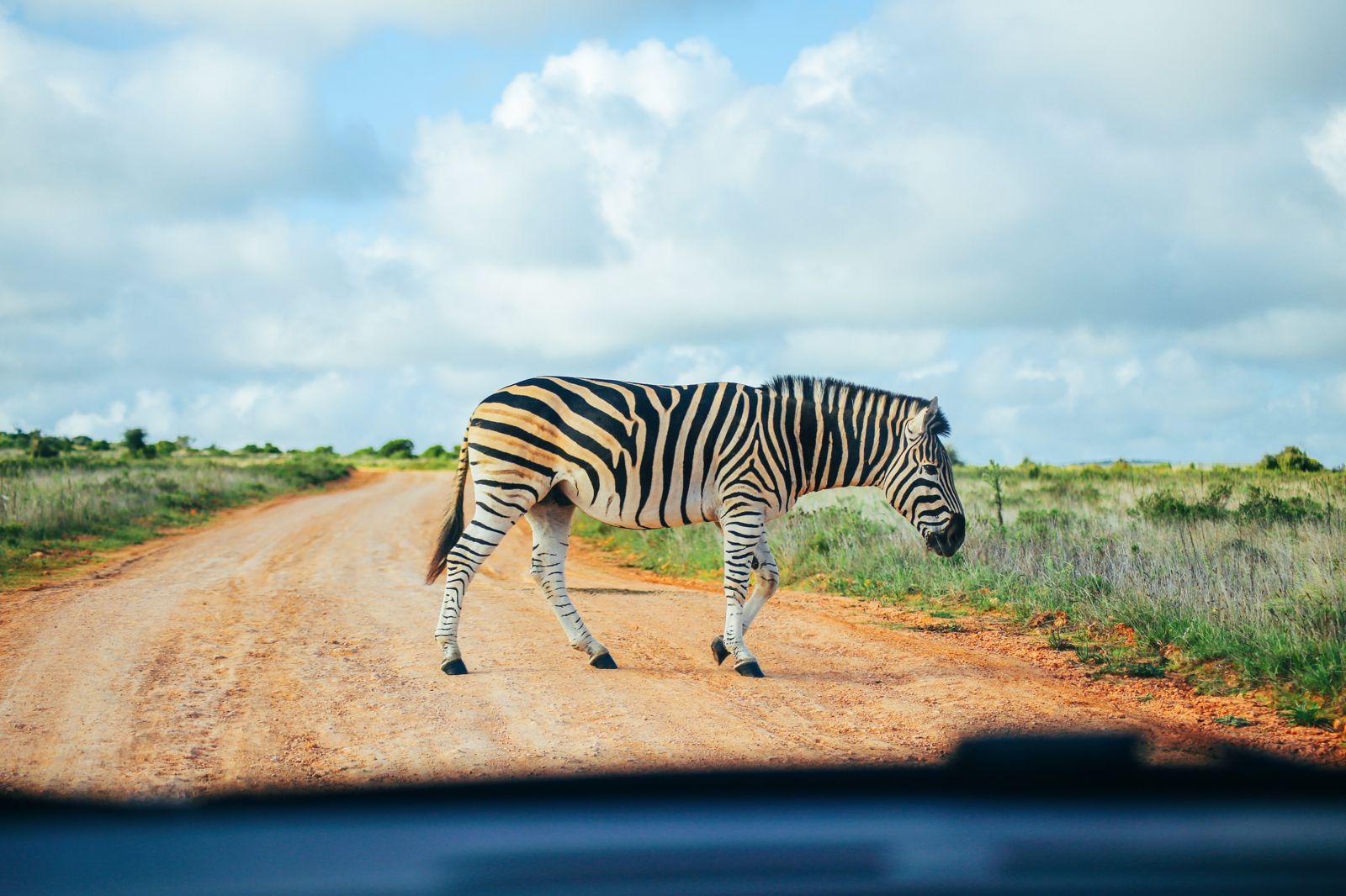 Postcards From South Africa... Port Elizabeth (11)