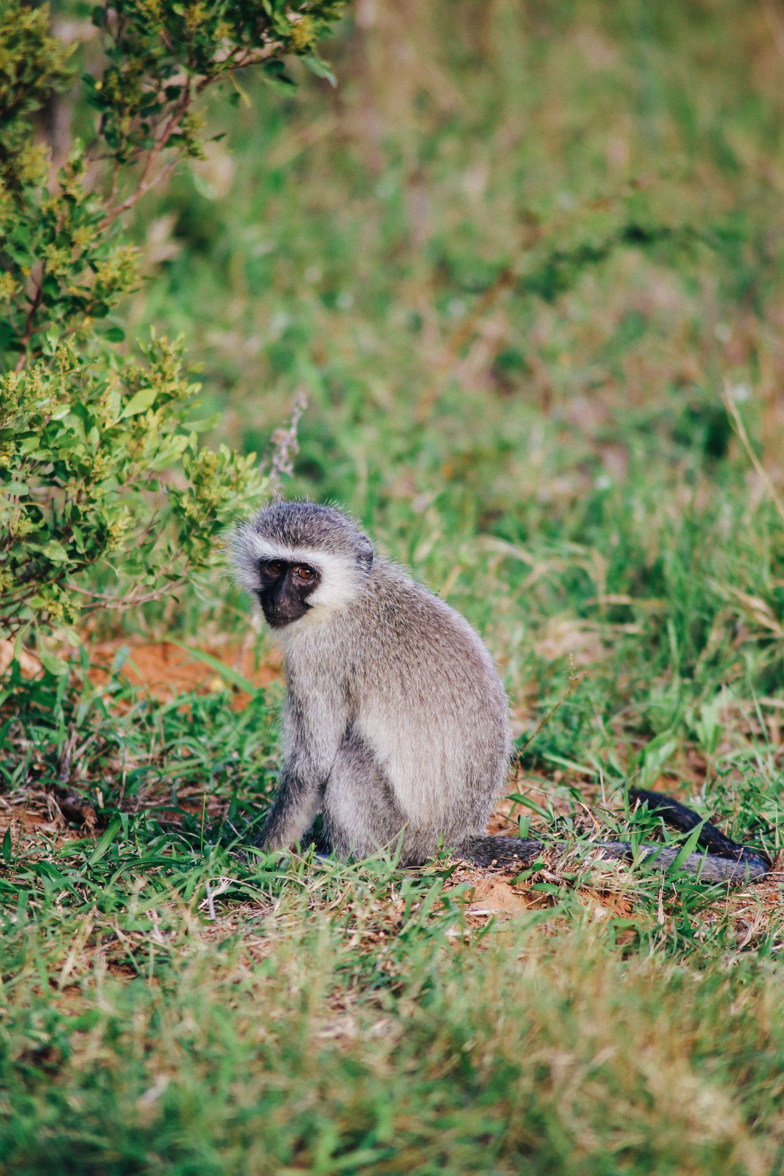 Postcards From South Africa... Port Elizabeth (1)