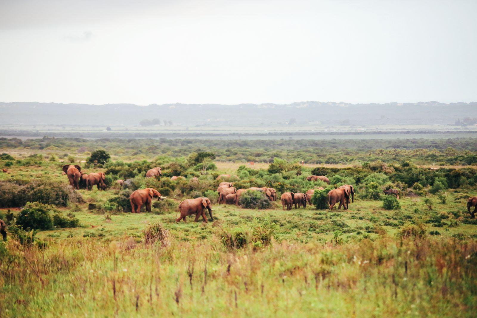 Postcards From South Africa... Port Elizabeth (3)