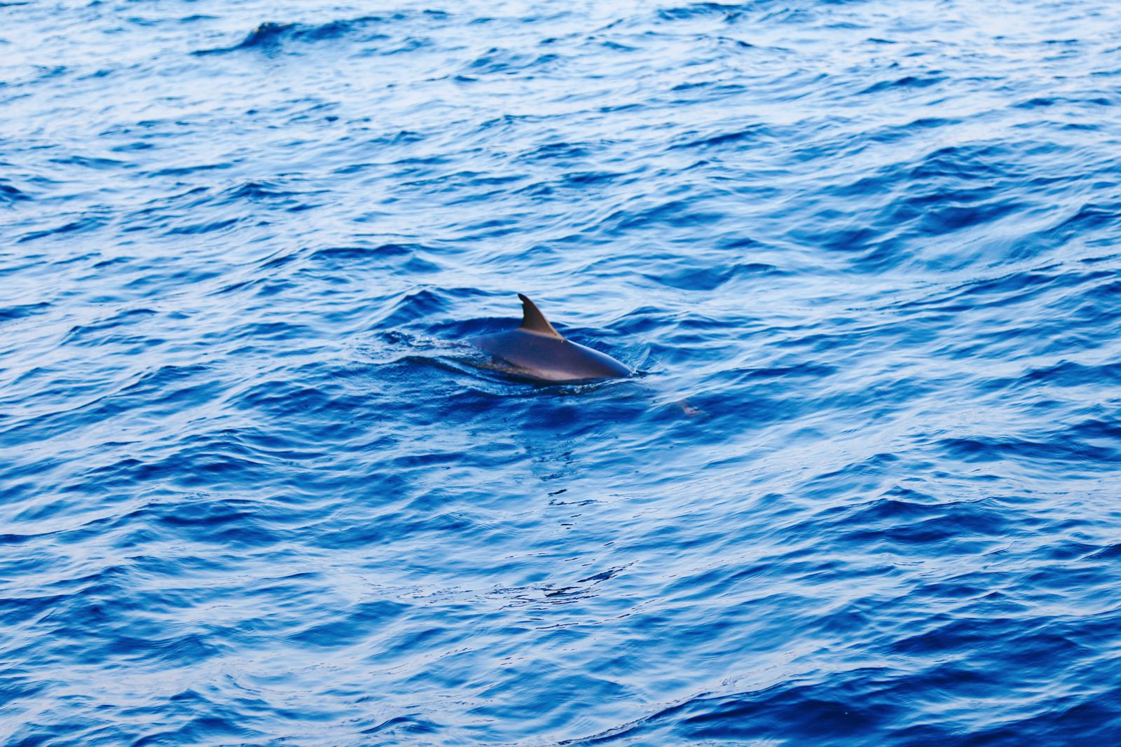 Dolphins, Sunsets & Cocktails At The Kurumba Maldives (26)