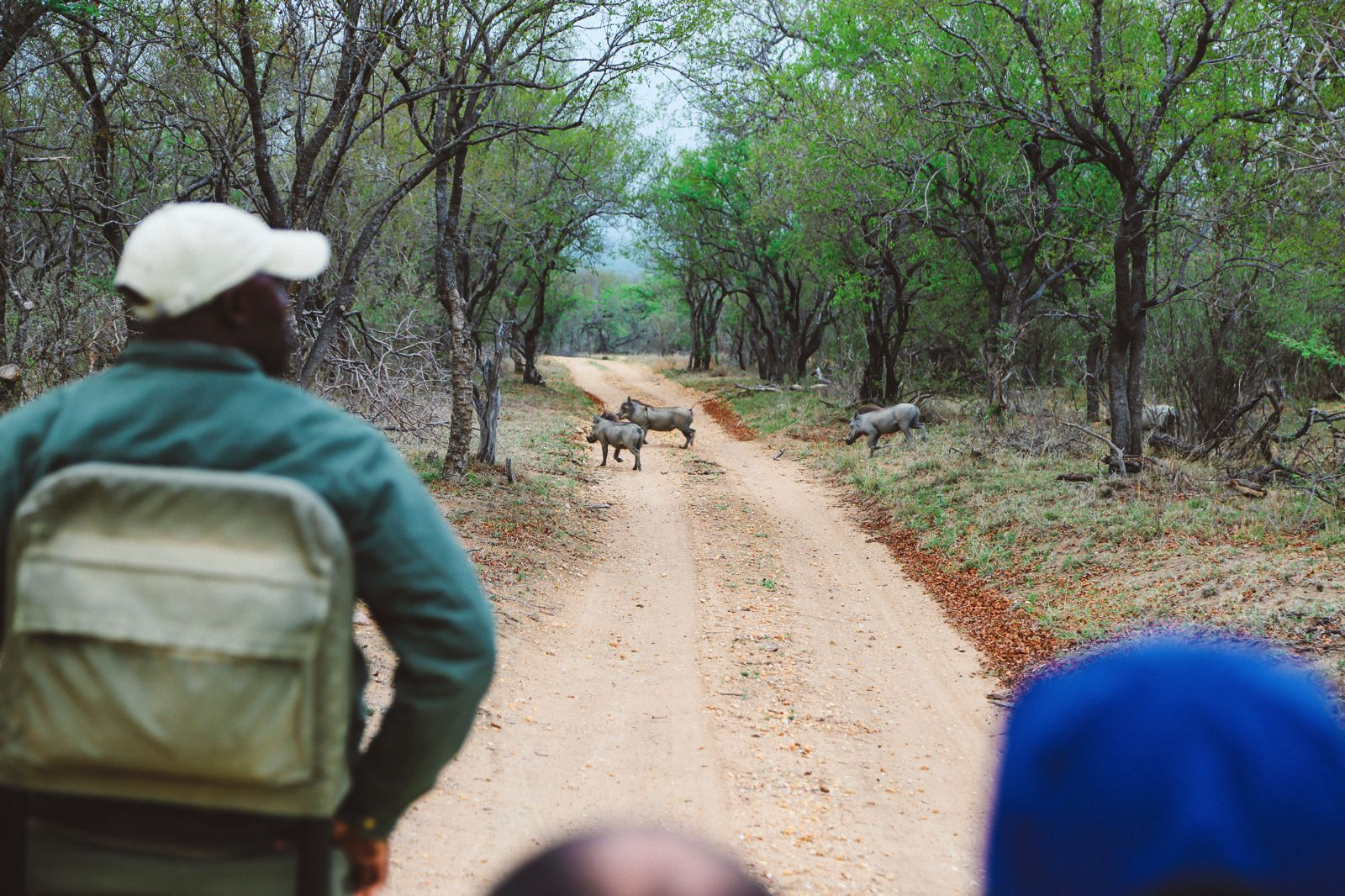 What's It Like To Be Stuck In A Pride Of Lions On Safari In South Africa? (22)