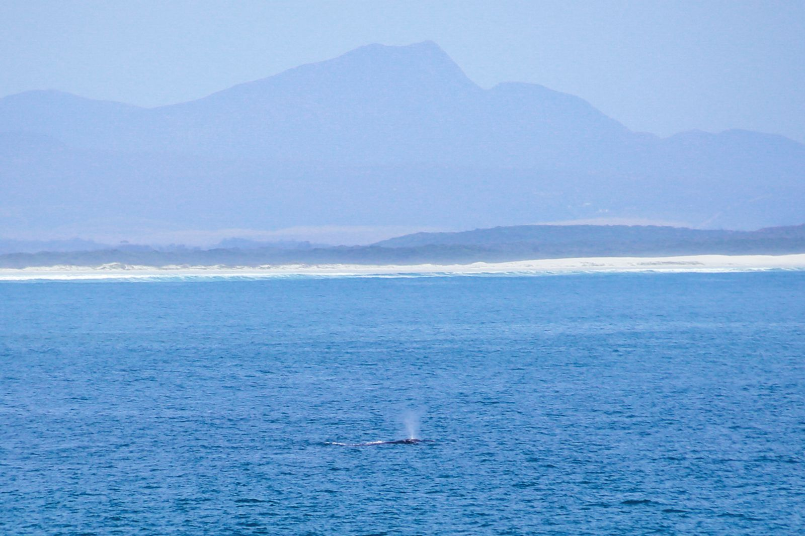 This Is The Best Place To Go Whale Watching In South Africa... And It Has Wine! (14)
