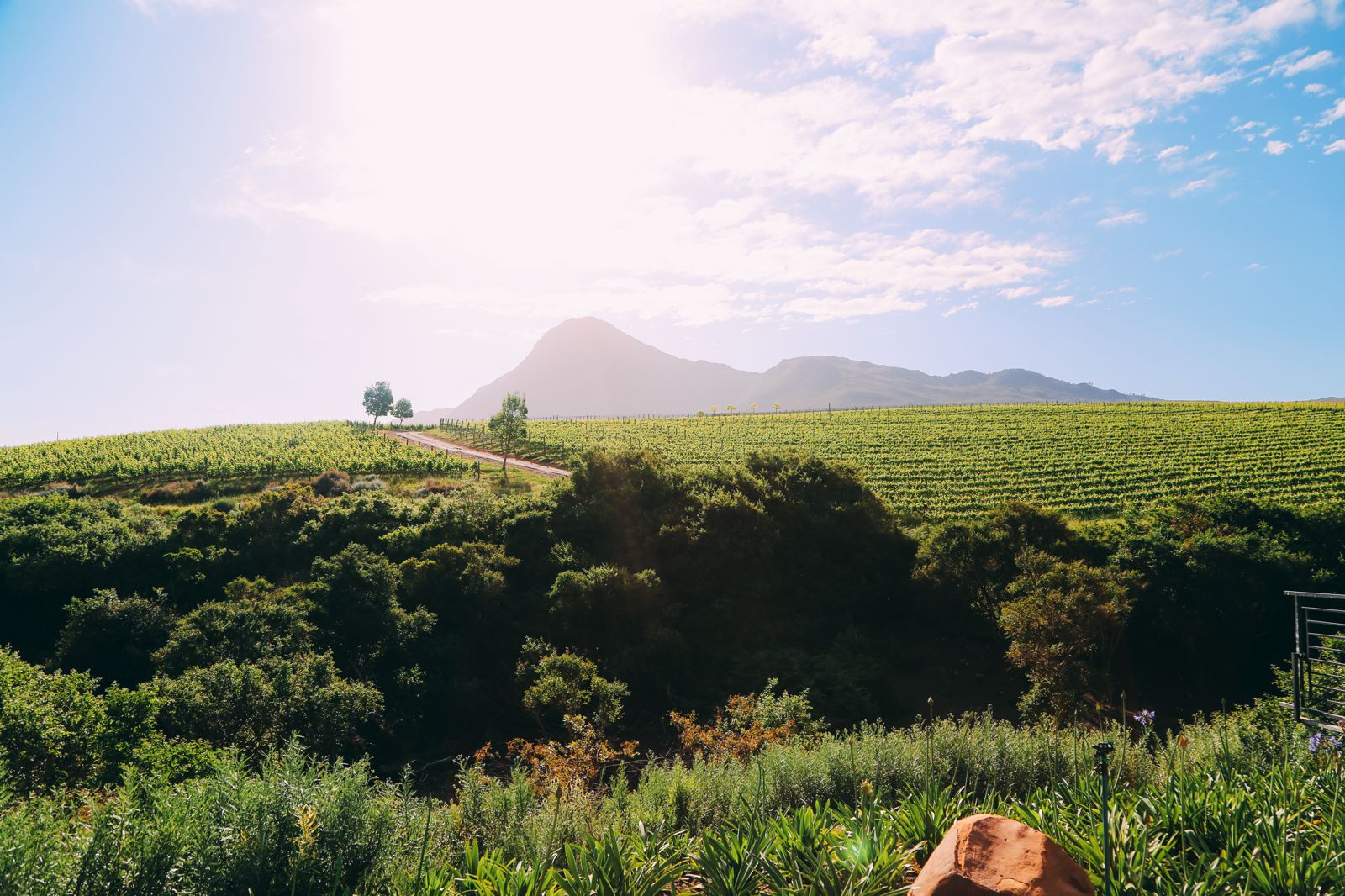 This Is The Best Place To Go Whale Watching In South Africa... And It Has Wine! (20)