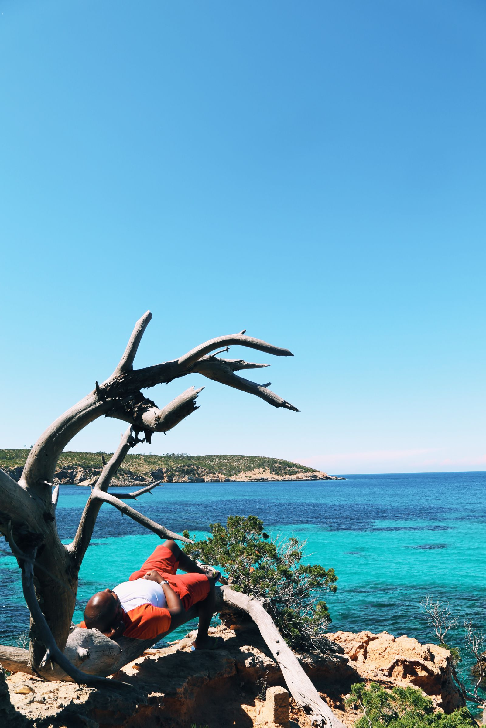 Resting on a branch in Ibiza, Spain - Travel