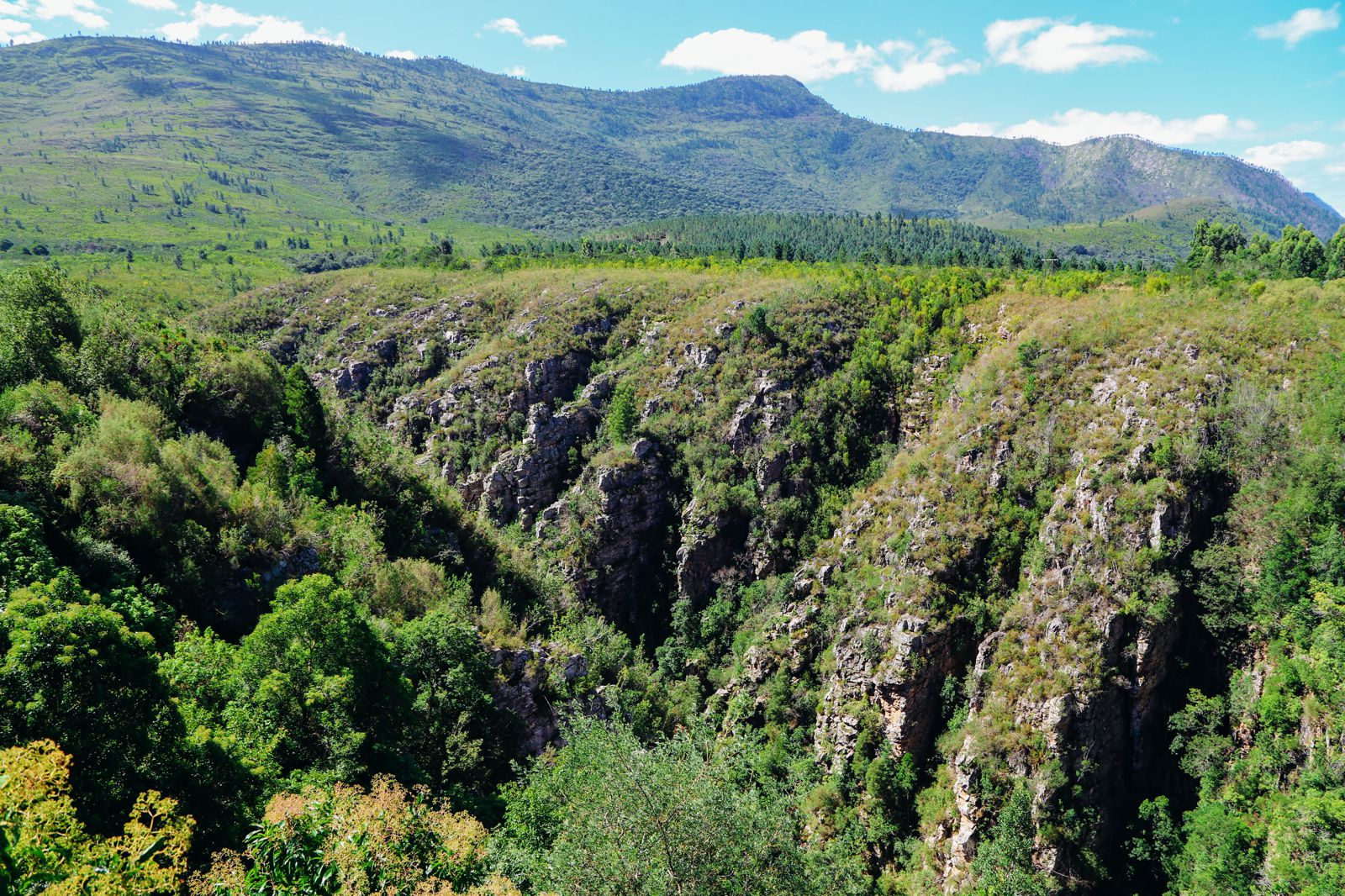 Ravines, Vineyards, Elephant Walking And The Most Spectacular Beach In South Africa's Eastern Cape (1)