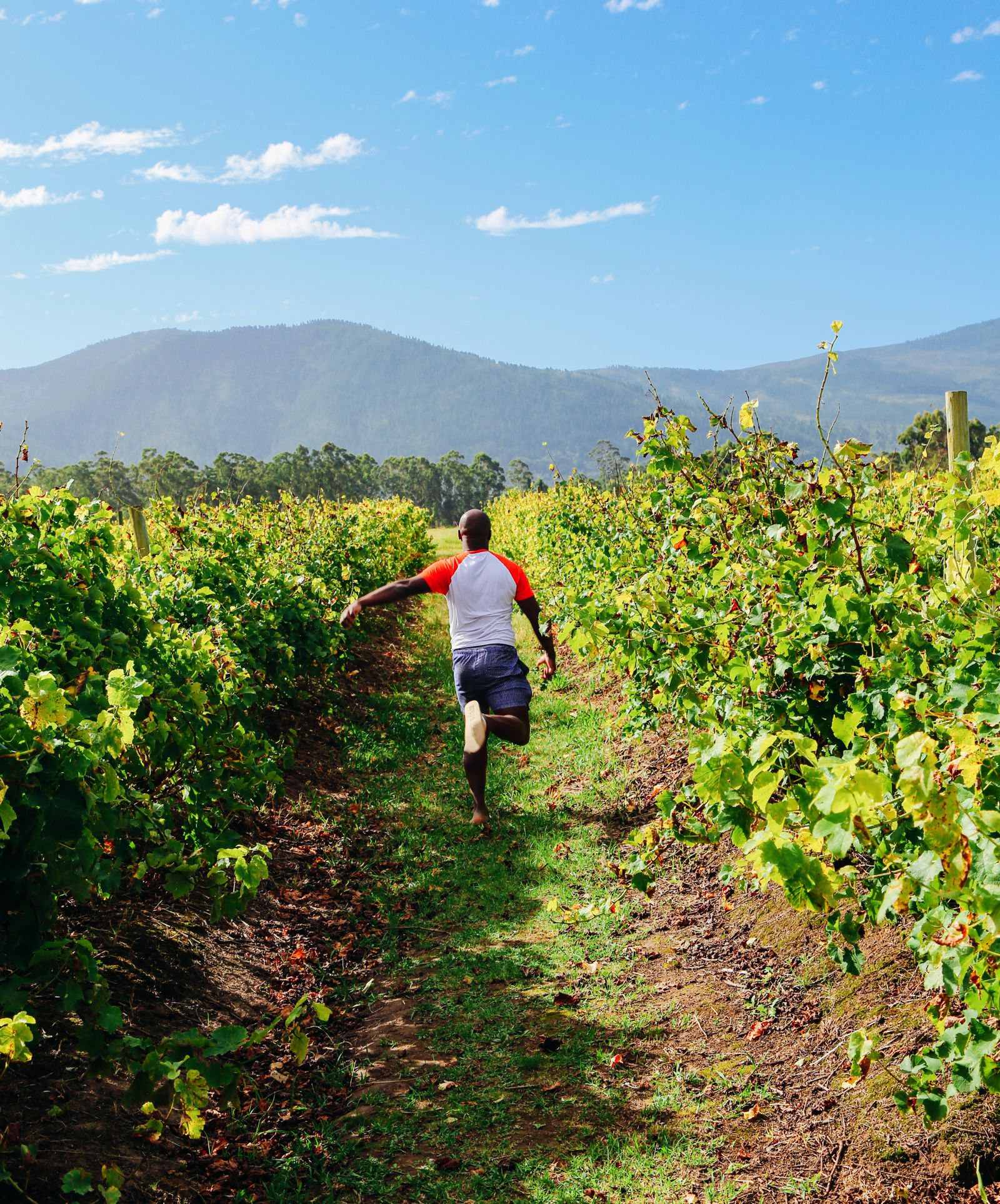 Ravines, Vineyards, Elephant Walking And The Most Spectacular Beach In South Africa's Eastern Cape (11)