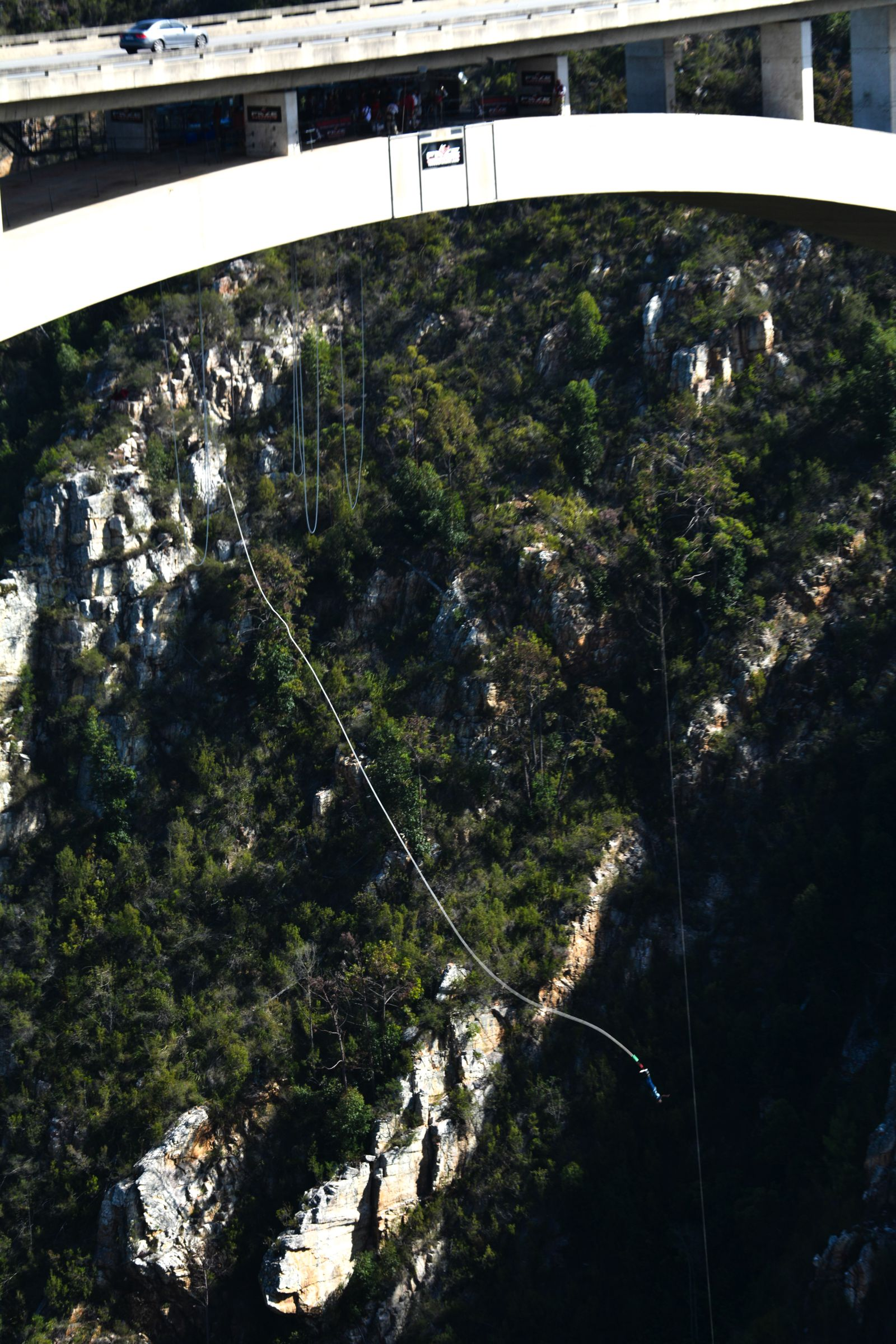 Eastern Cape Adventures In South Africa: Wines, 1,000 Year Old Trees And The Tallest Bungee In The World! (7)