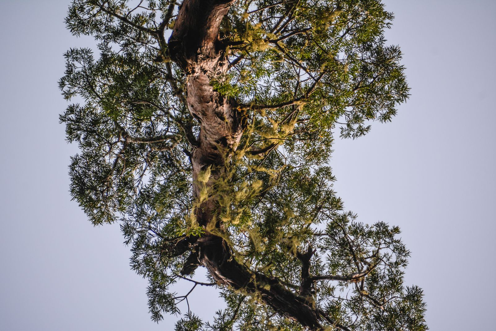 Eastern Cape Adventures In South Africa: Wines, 1,000 Year Old Trees And The Tallest Bungee In The World! (10)