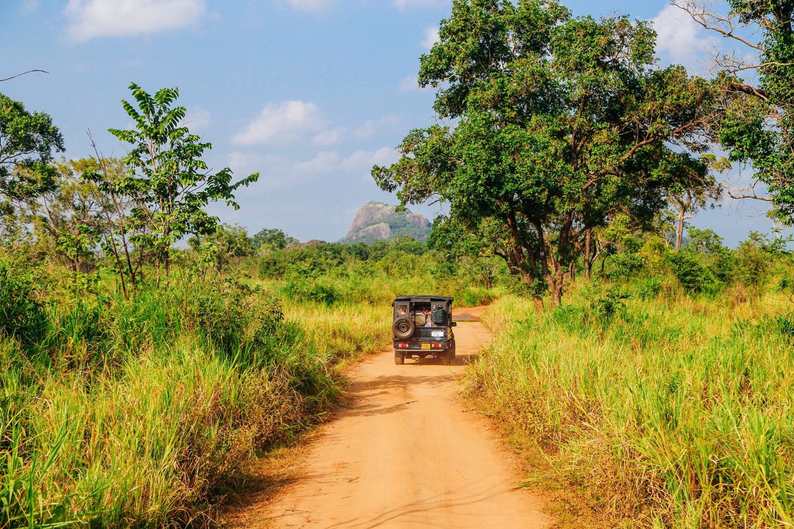Safari in Mineriya National Park Sri Lanka Elephants (5)