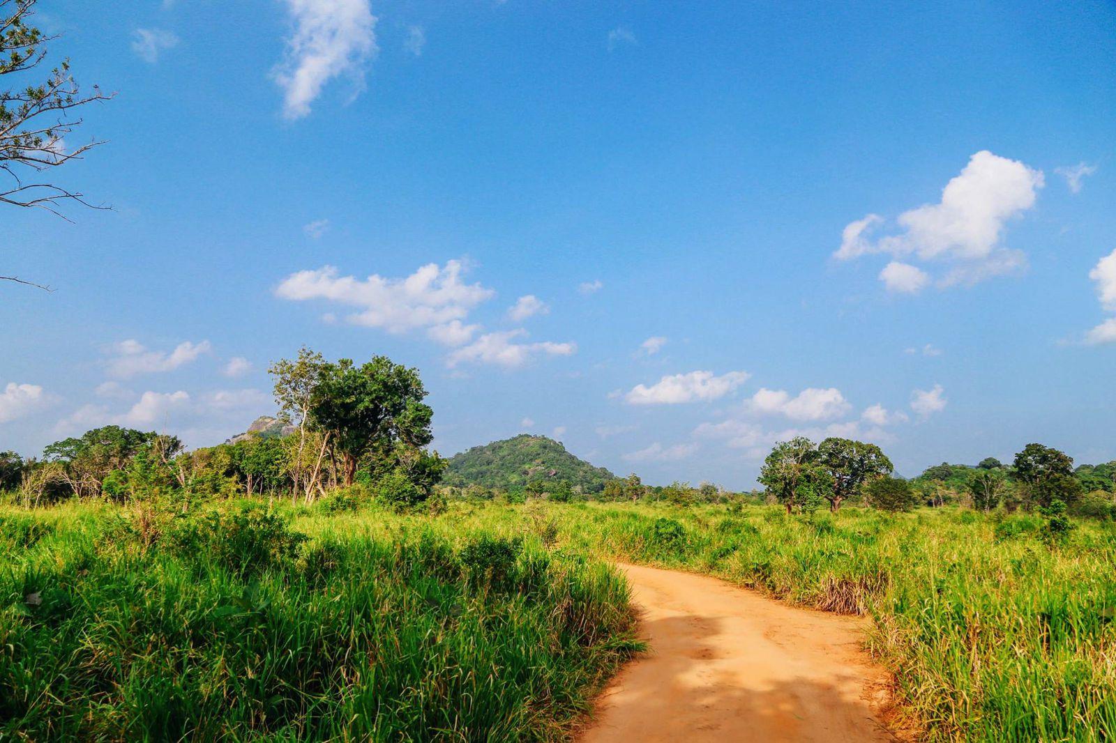 Safari in Mineriya National Park Sri Lanka Elephants (3)