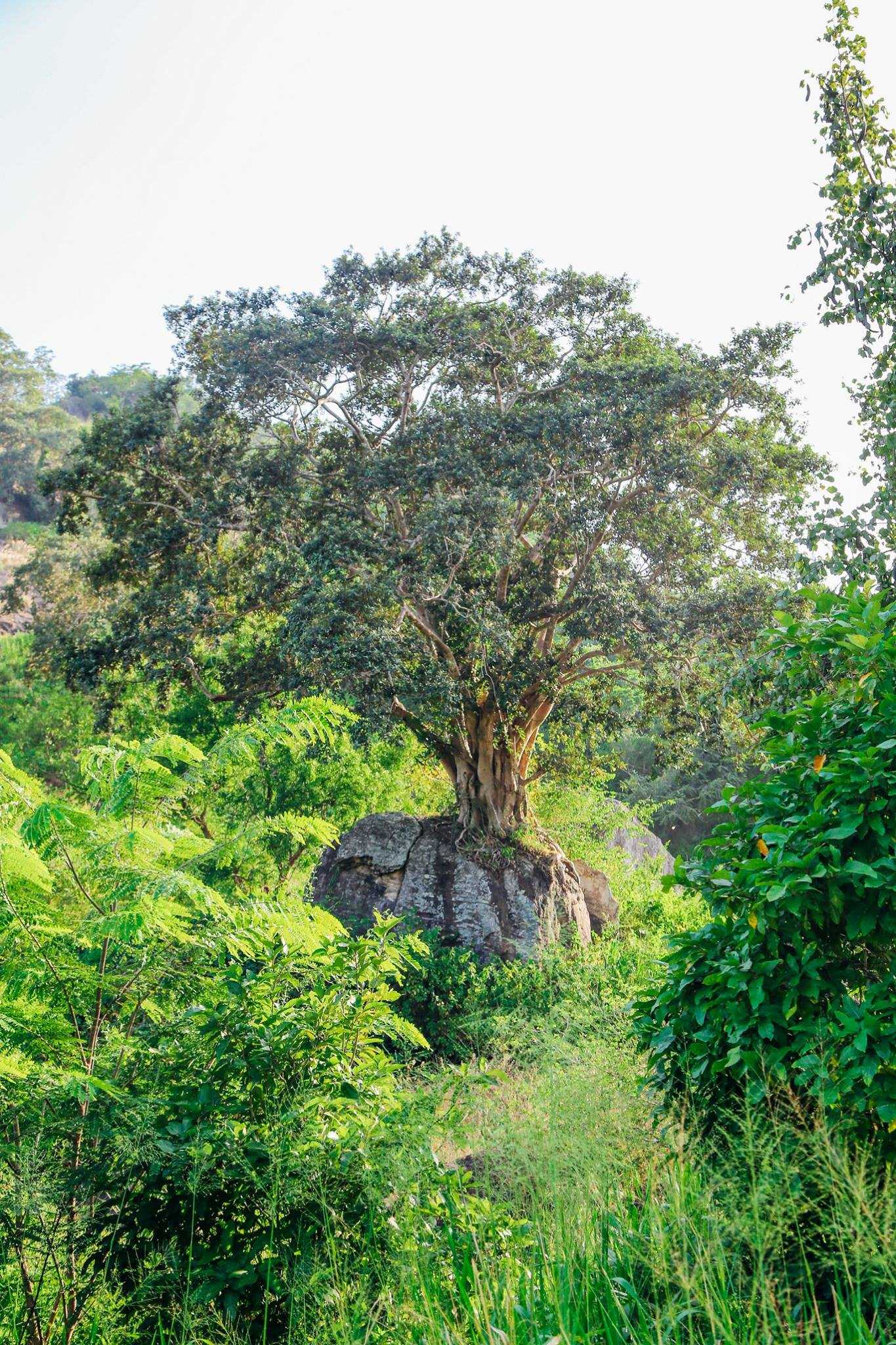 Safari in Mineriya National Park Sri Lanka Elephants (13)