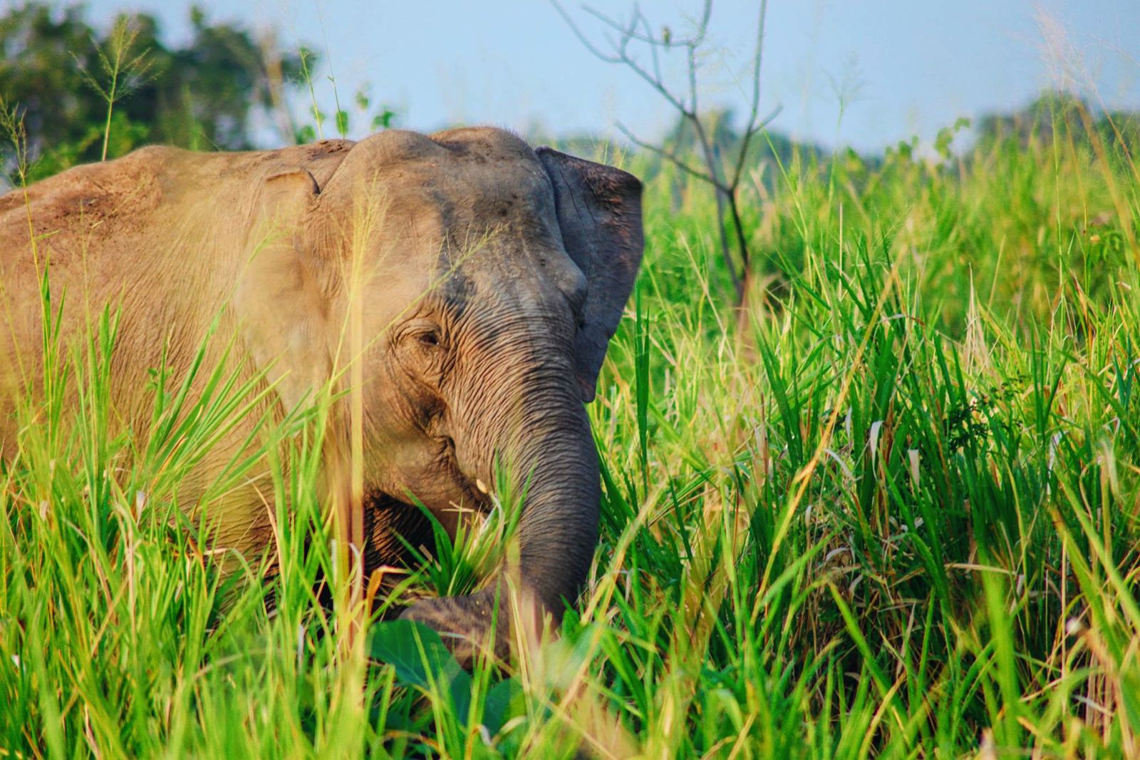 Safari in Mineriya National Park Sri Lanka Elephants (21)