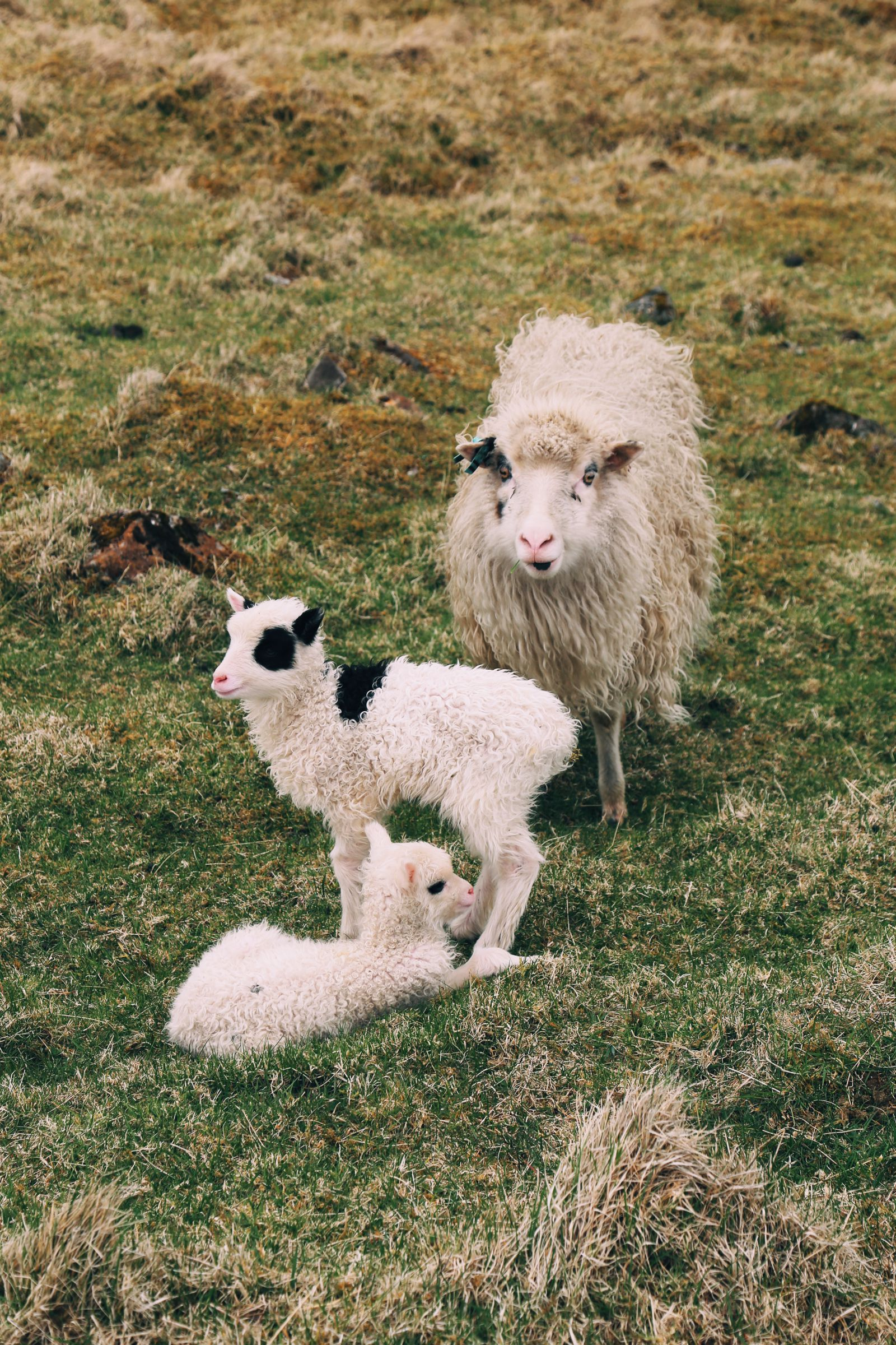 What Is It Like To Visit The Faroe Islands? (1)