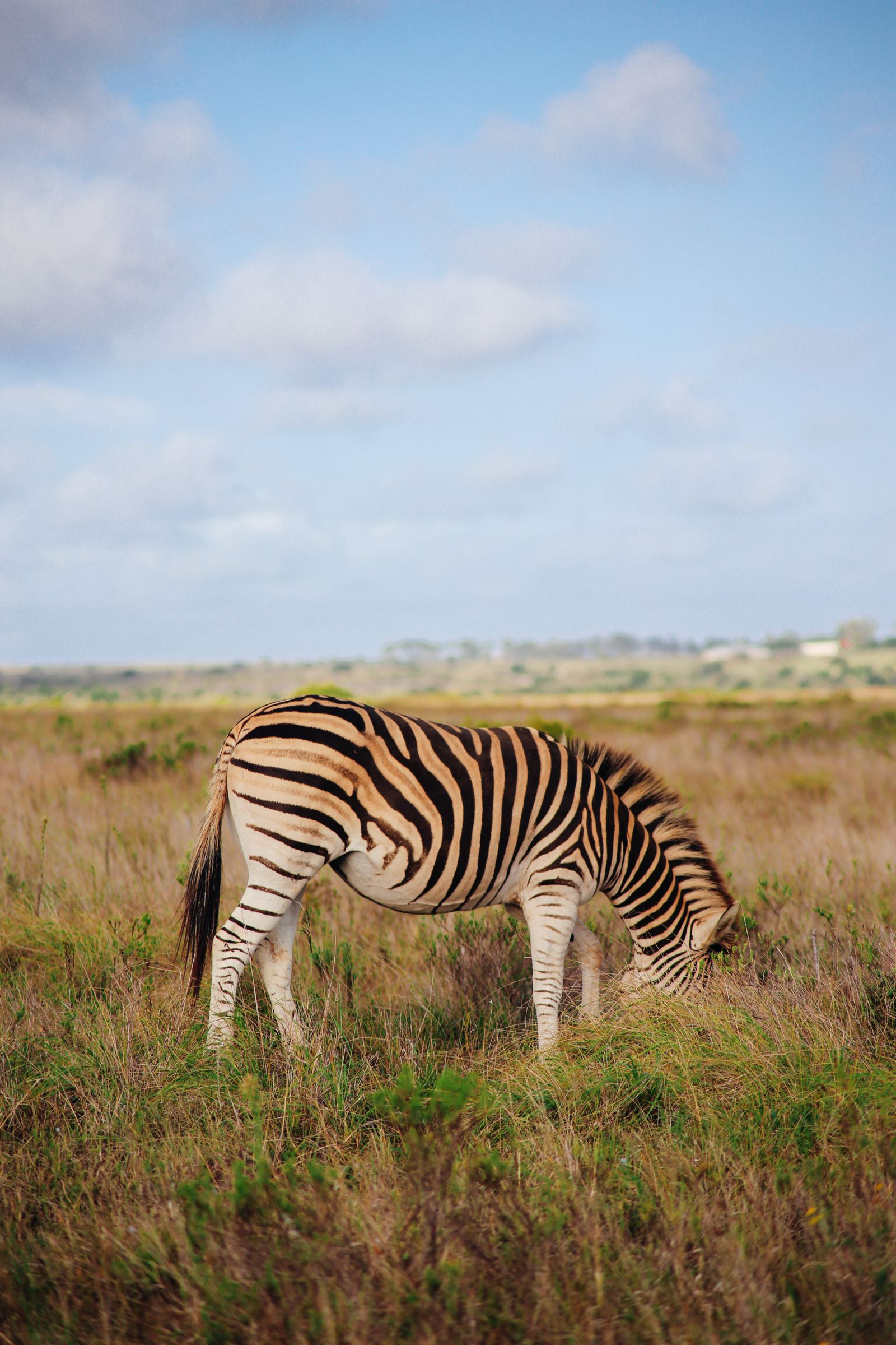 An Afternoon In Addo Elephant Park - A South African Must-Do! (3)