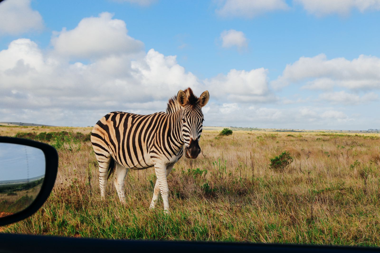 An Afternoon In Addo Elephant Park - A South African Must-Do! (7)