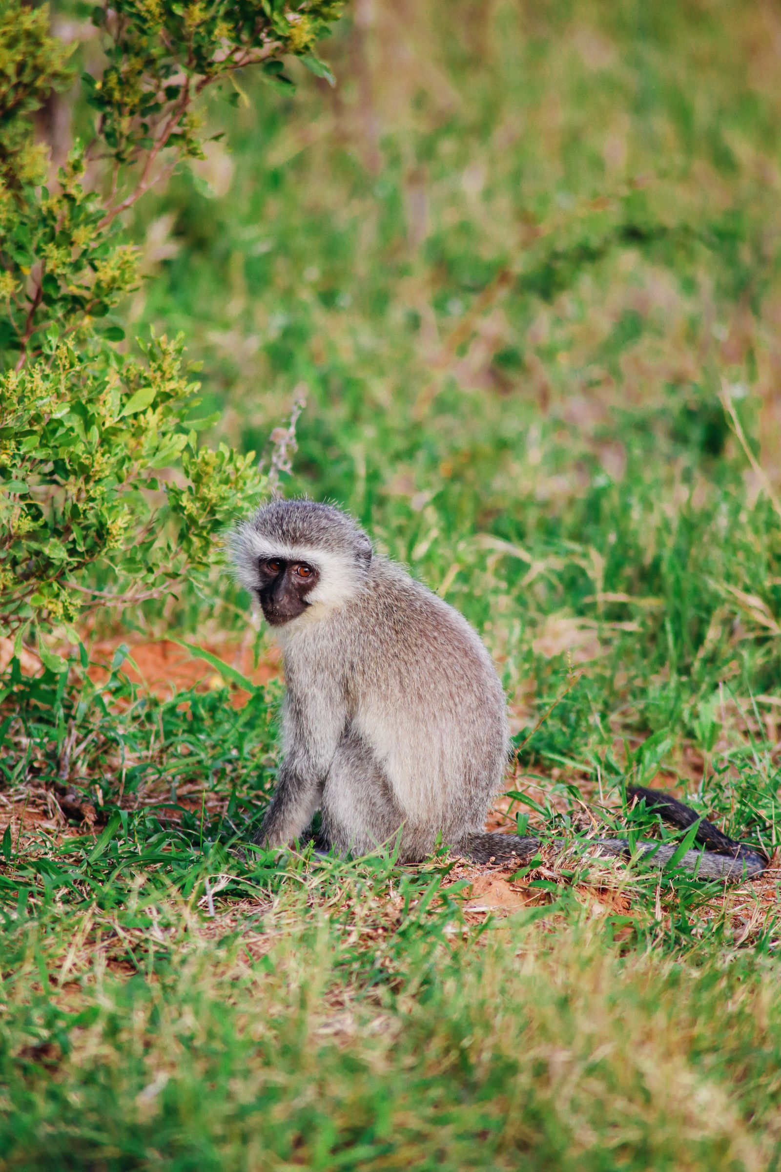 An Afternoon In Addo Elephant Park - A South African Must-Do! (11)