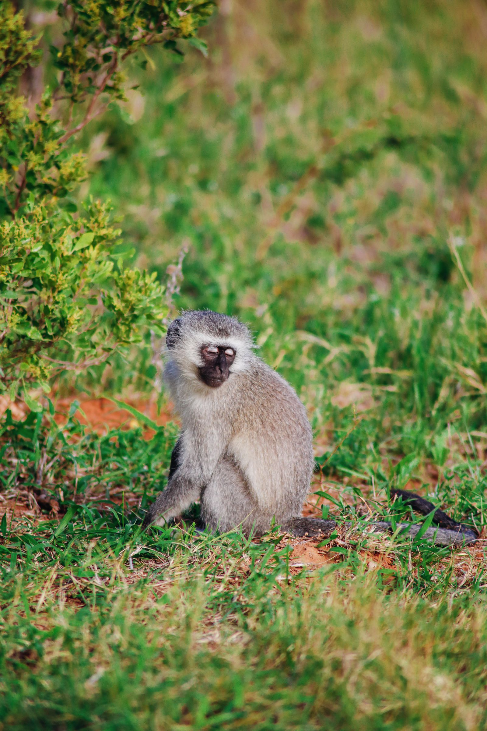 An Afternoon In Addo Elephant Park - A South African Must-Do! (12)