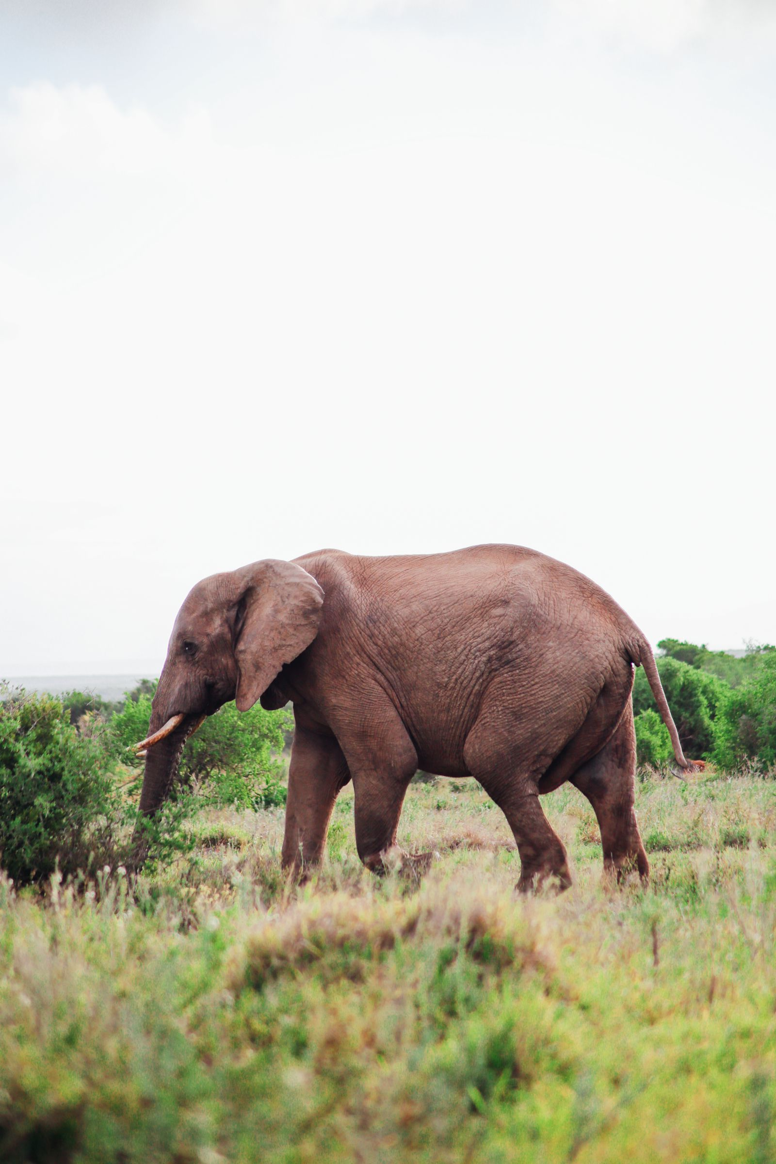 An Afternoon In Addo Elephant Park - A South African Must-Do! (14)