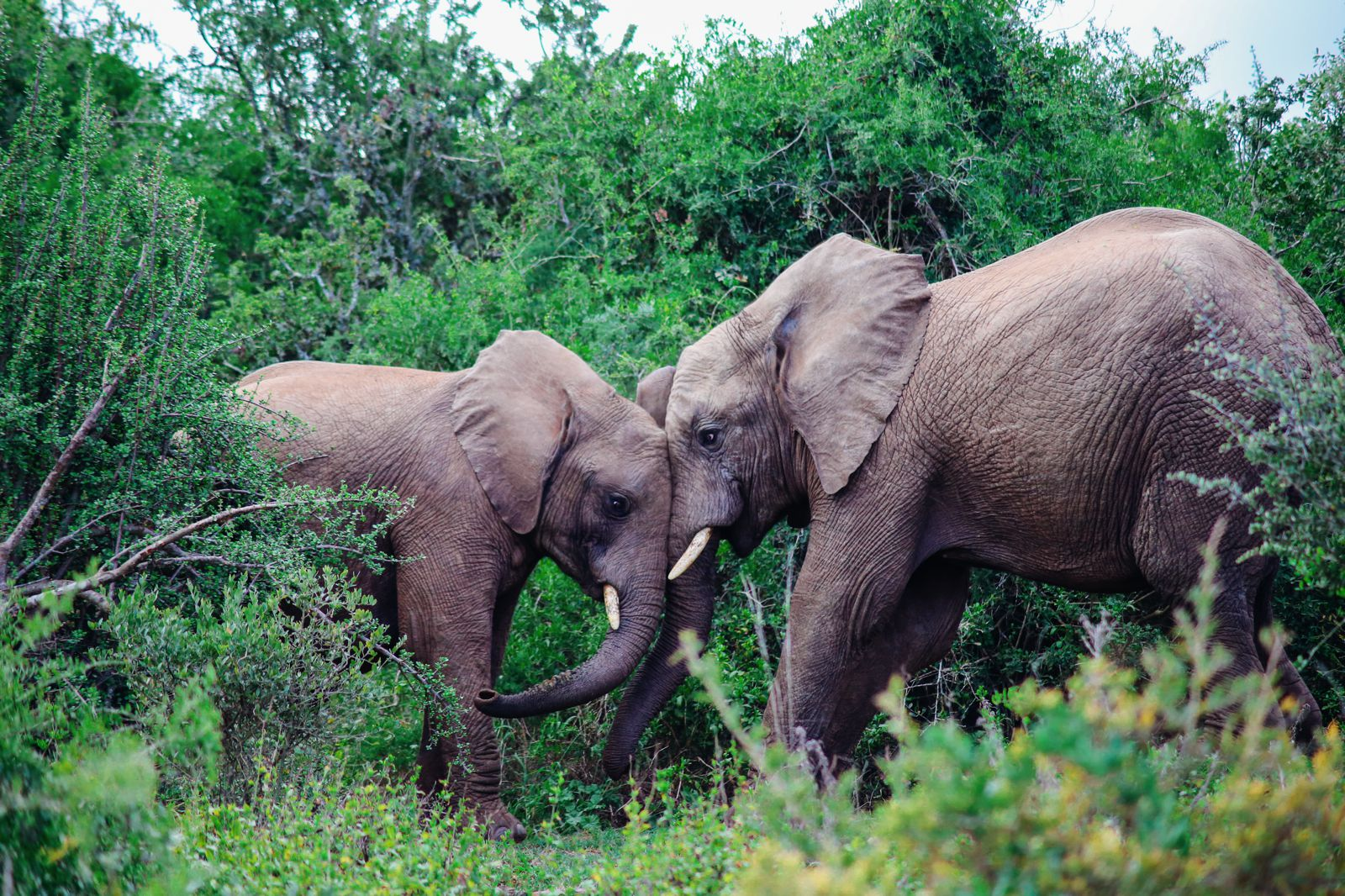 An Afternoon In Addo Elephant Park - A South African Must-Do! (17)