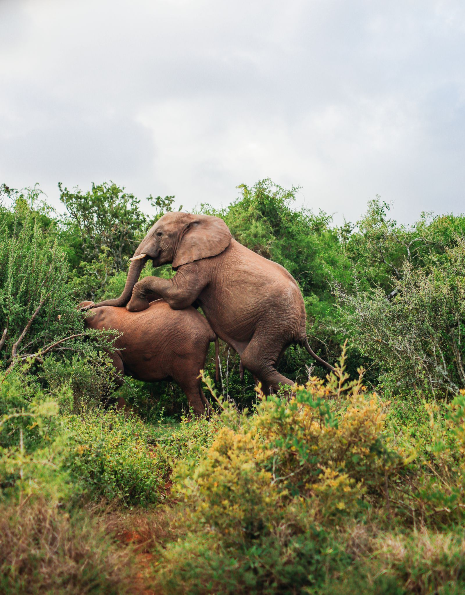 An Afternoon In Addo Elephant Park - A South African Must-Do! (18)