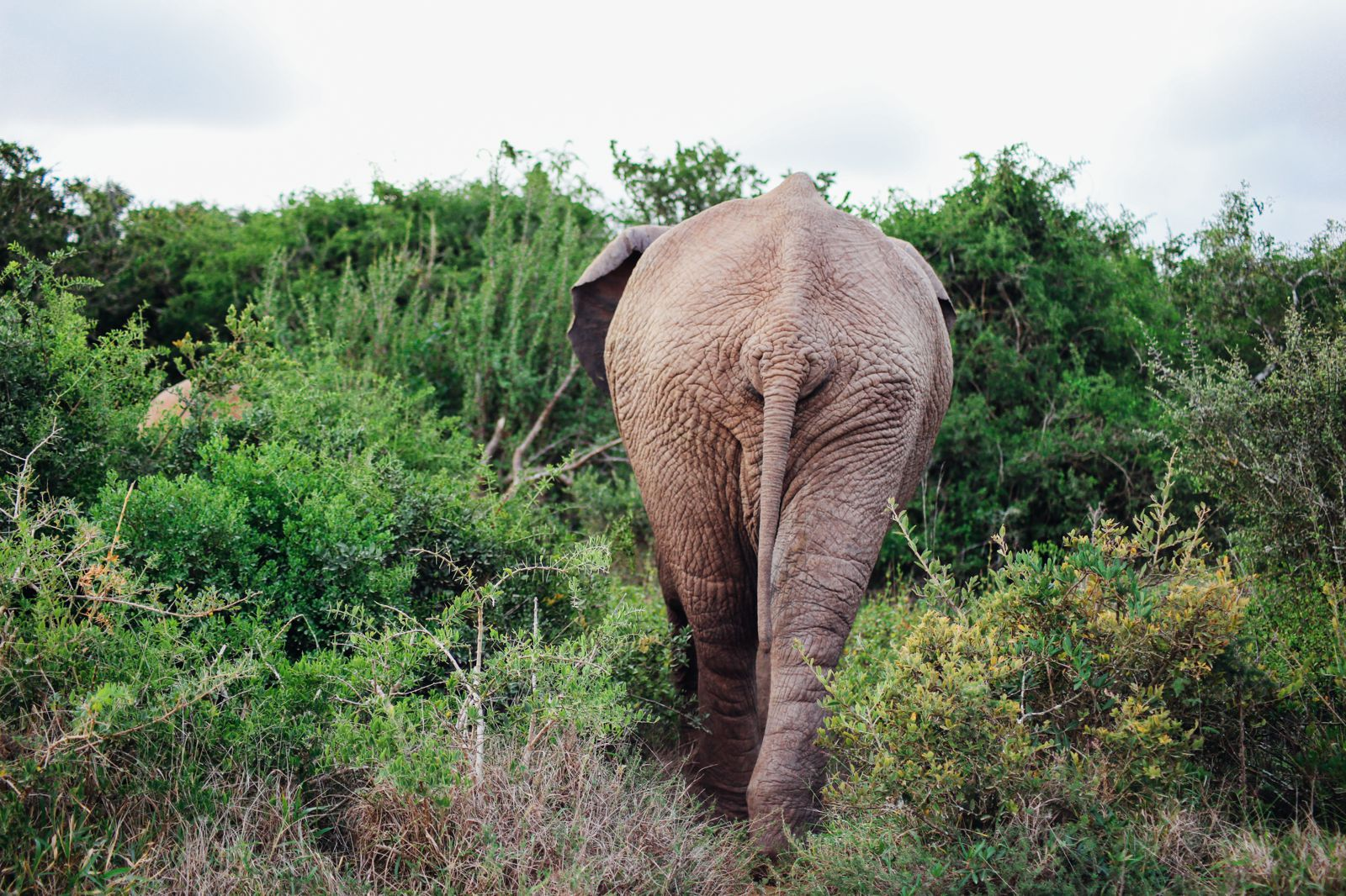 An Afternoon In Addo Elephant Park - A South African Must-Do! (19)