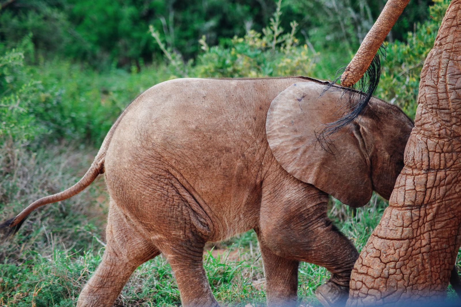 An Afternoon In Addo Elephant Park - A South African Must-Do! (20)