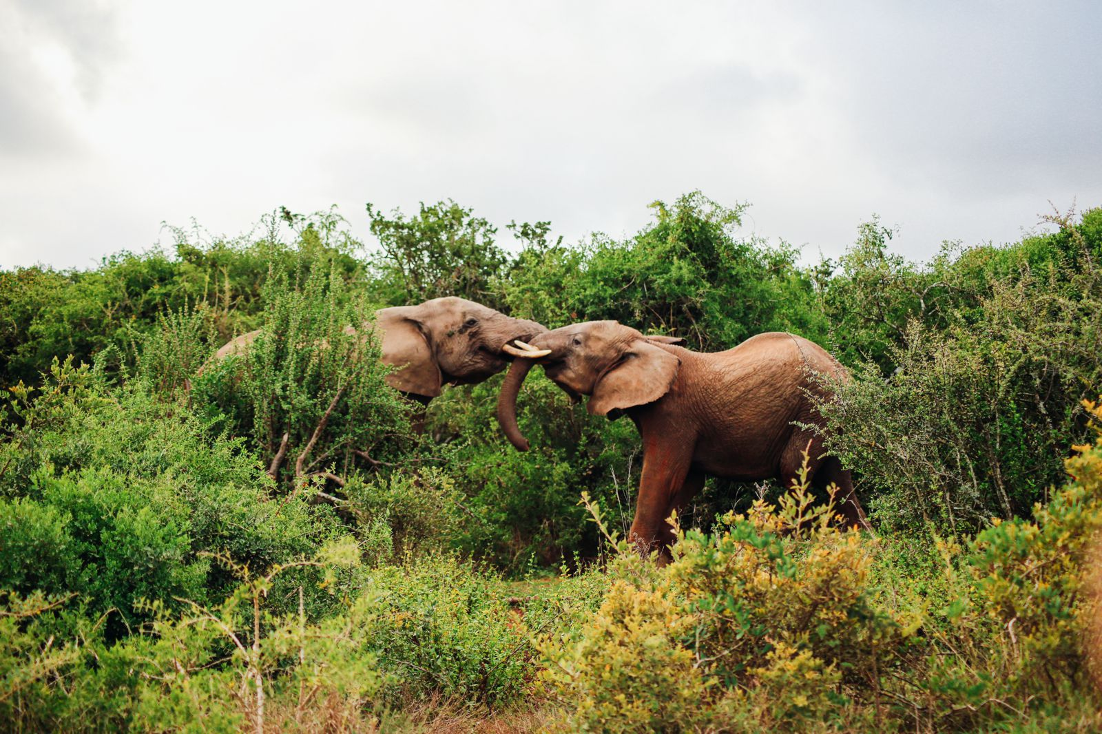 An Afternoon In Addo Elephant Park - A South African Must-Do! (21)