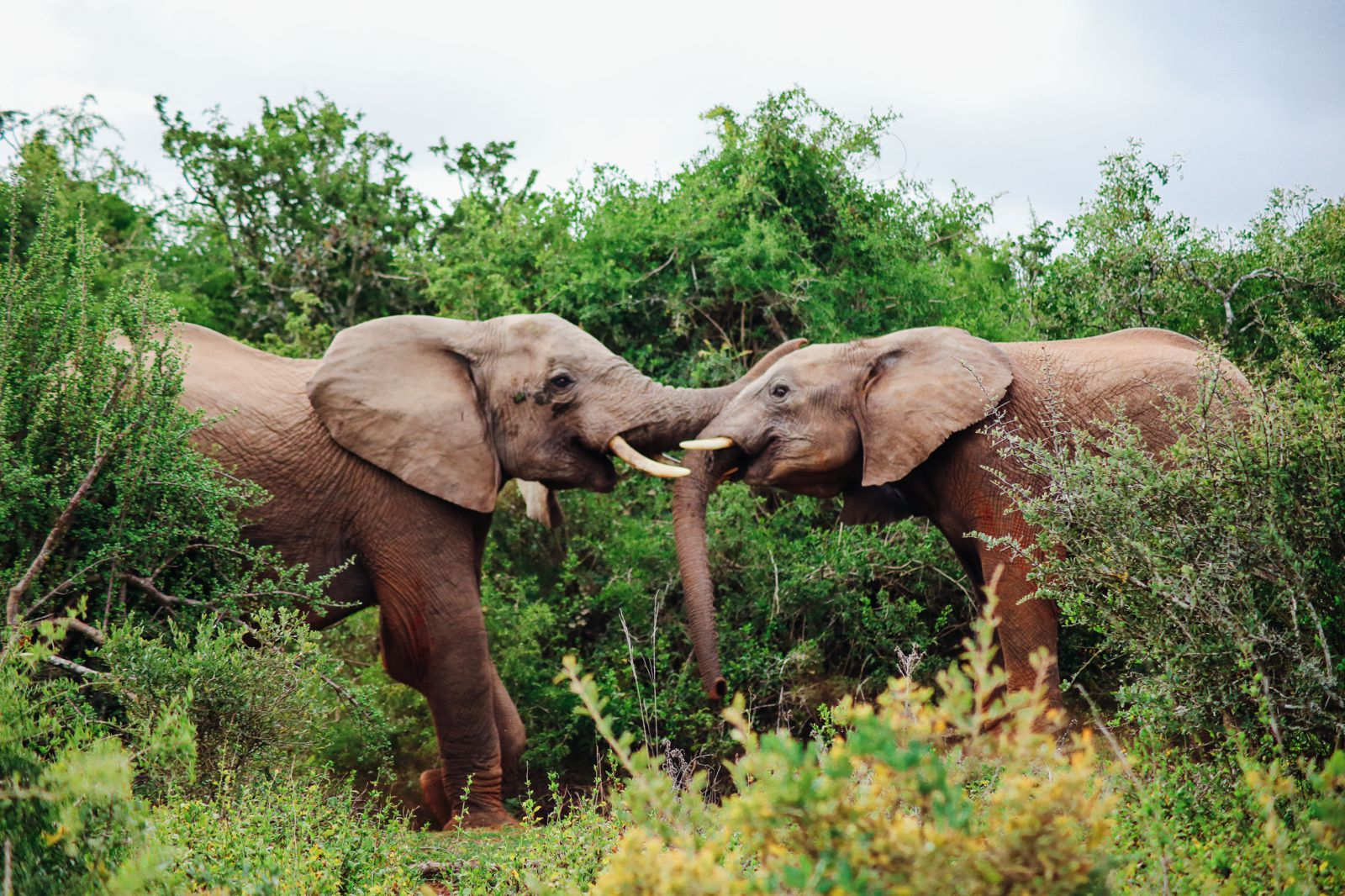 An Afternoon In Addo Elephant Park - A South African Must-Do! (22)