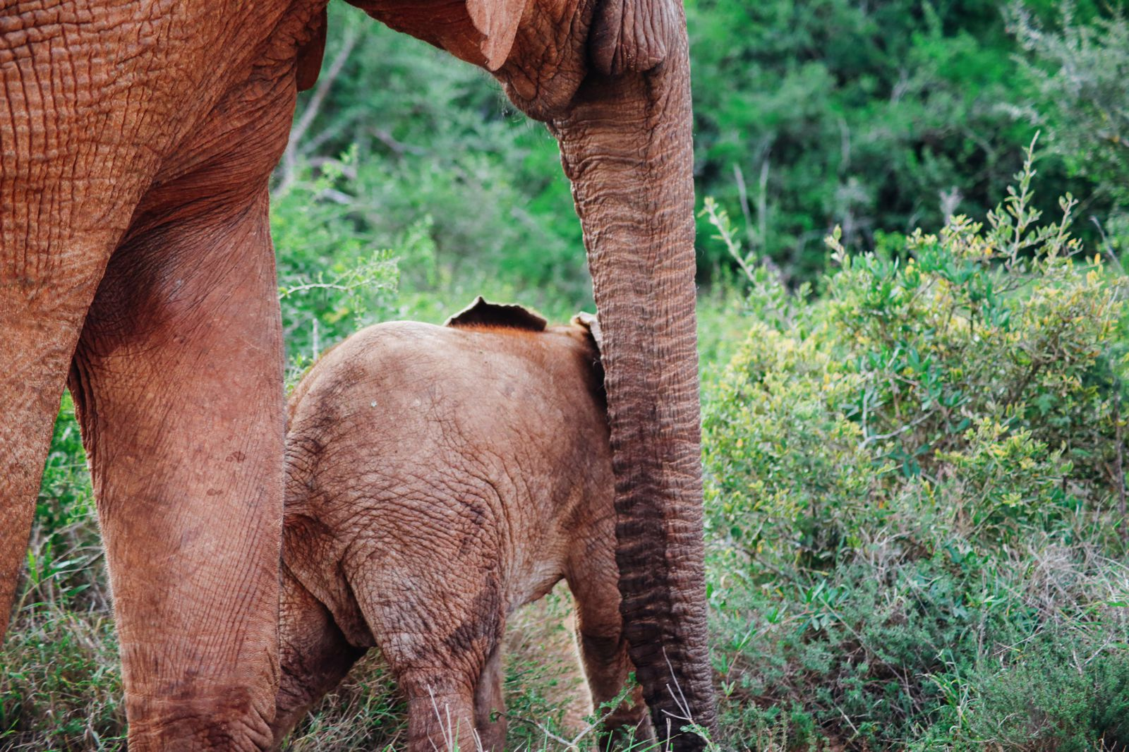 An Afternoon In Addo Elephant Park - A South African Must-Do! (23)