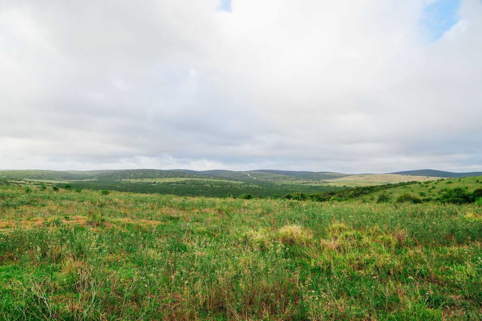 An Afternoon In Addo Elephant Park - A South African Must-Do! (24)