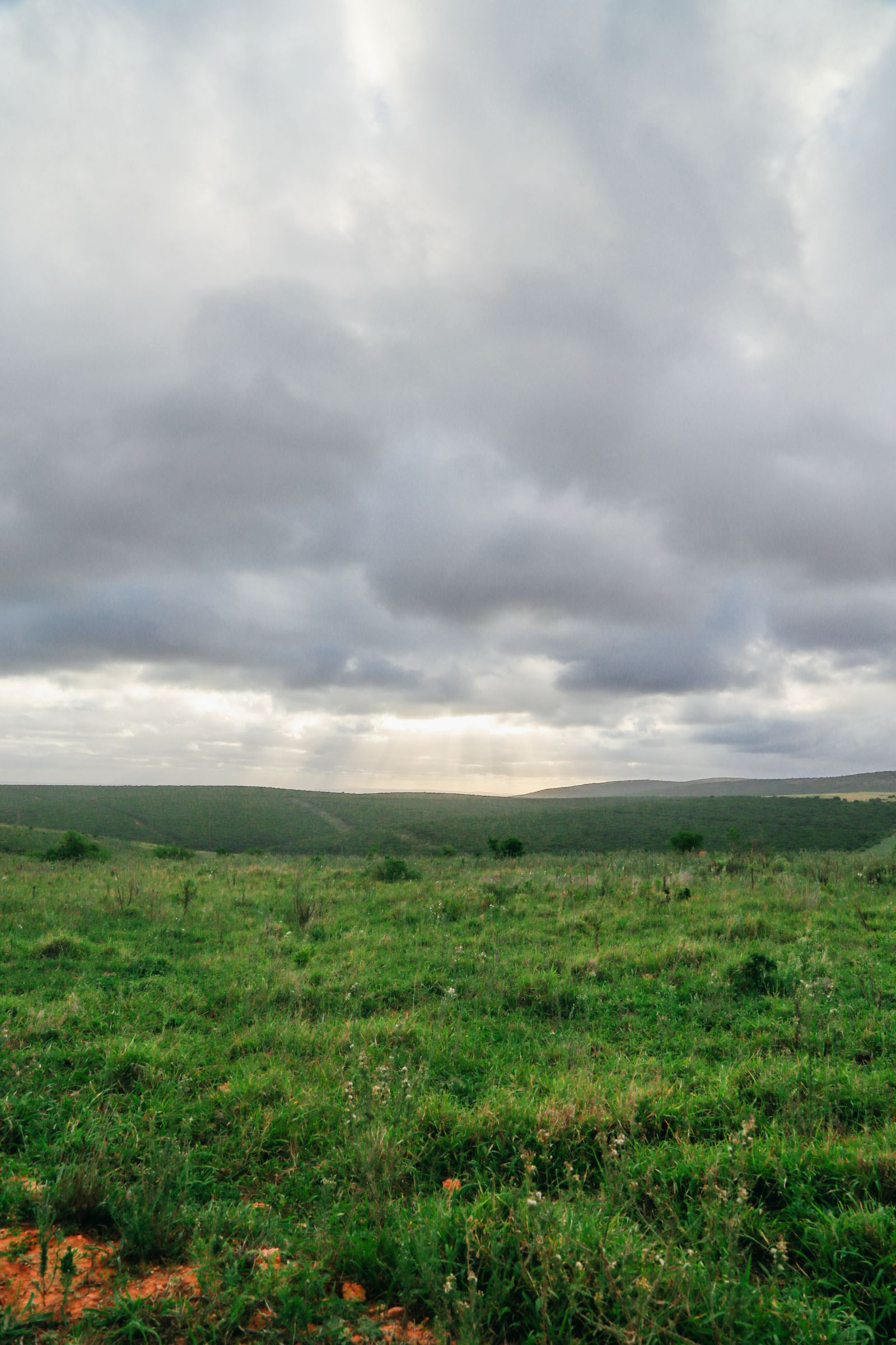 An Afternoon In Addo Elephant Park - A South African Must-Do! (26)