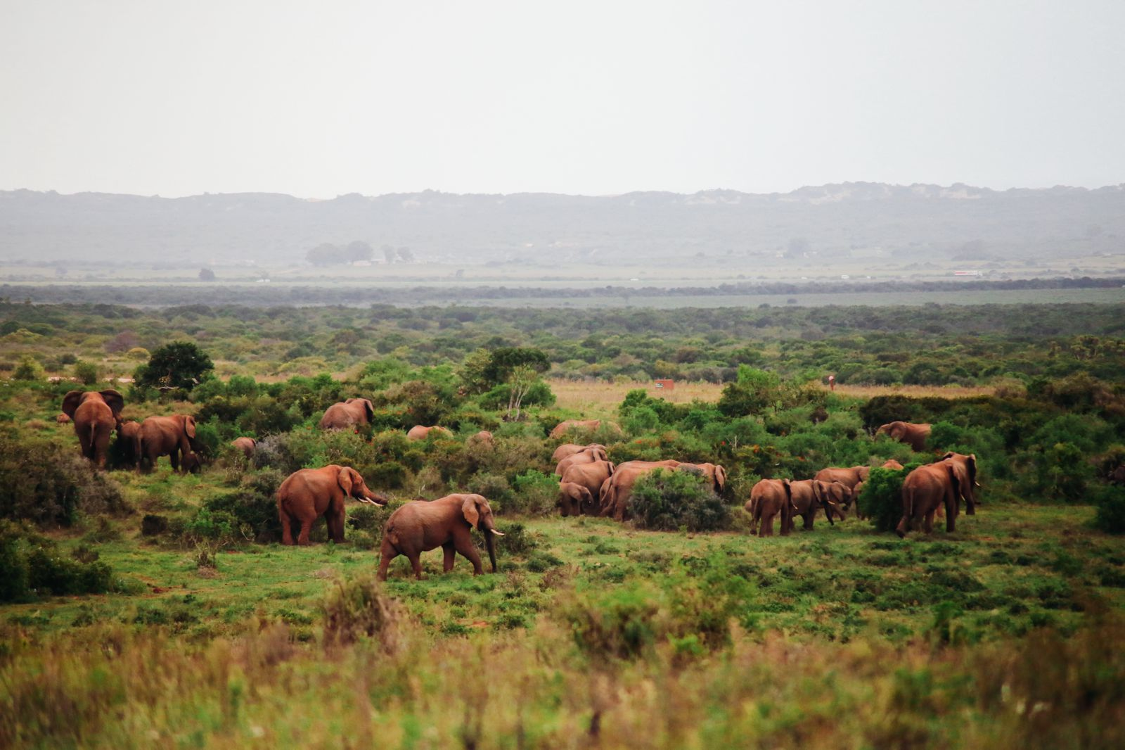 An Afternoon In Addo Elephant Park - A South African Must-Do! (33)