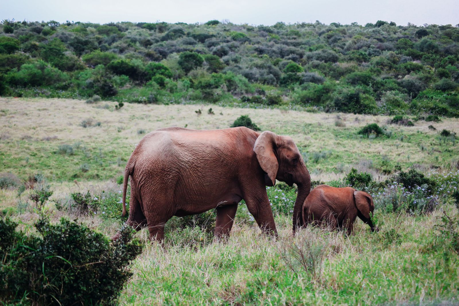 An Afternoon In Addo Elephant Park - A South African Must-Do! (36)