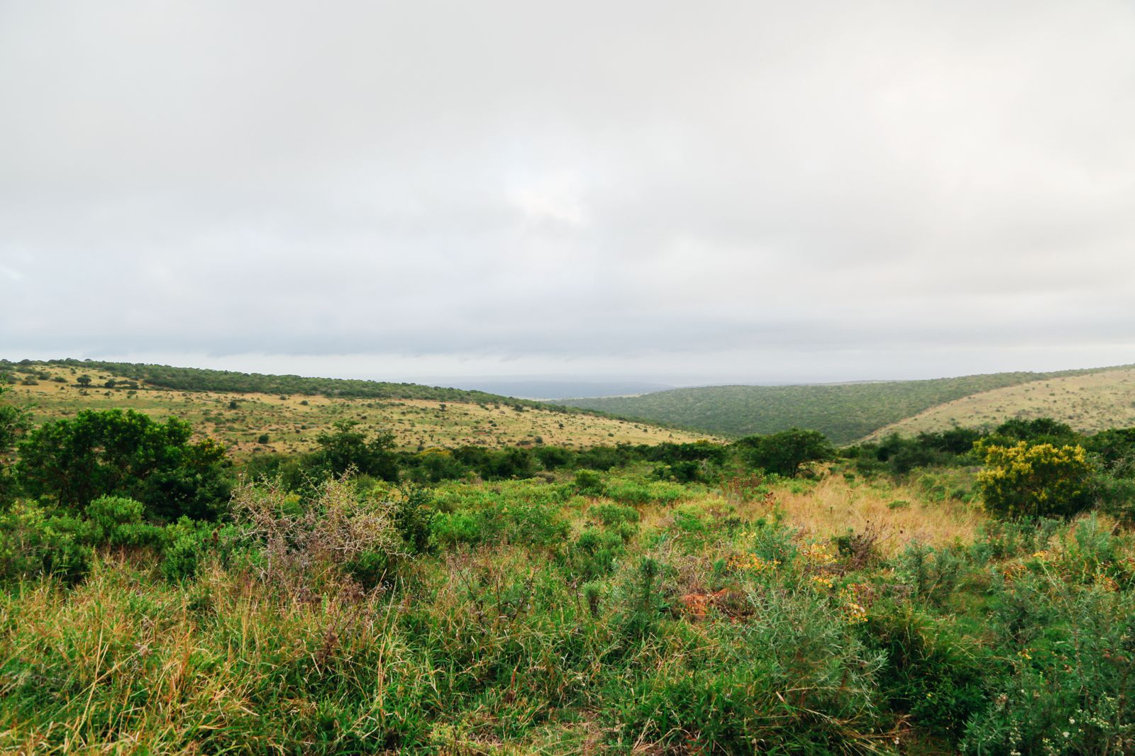 An Afternoon In Addo Elephant Park - A South African Must-Do! (38)
