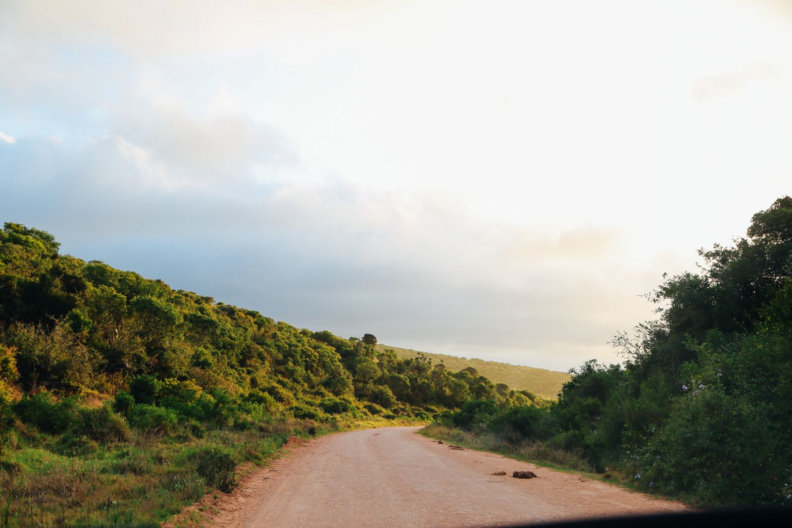 An Afternoon In Addo Elephant Park - A South African Must-Do! (39)