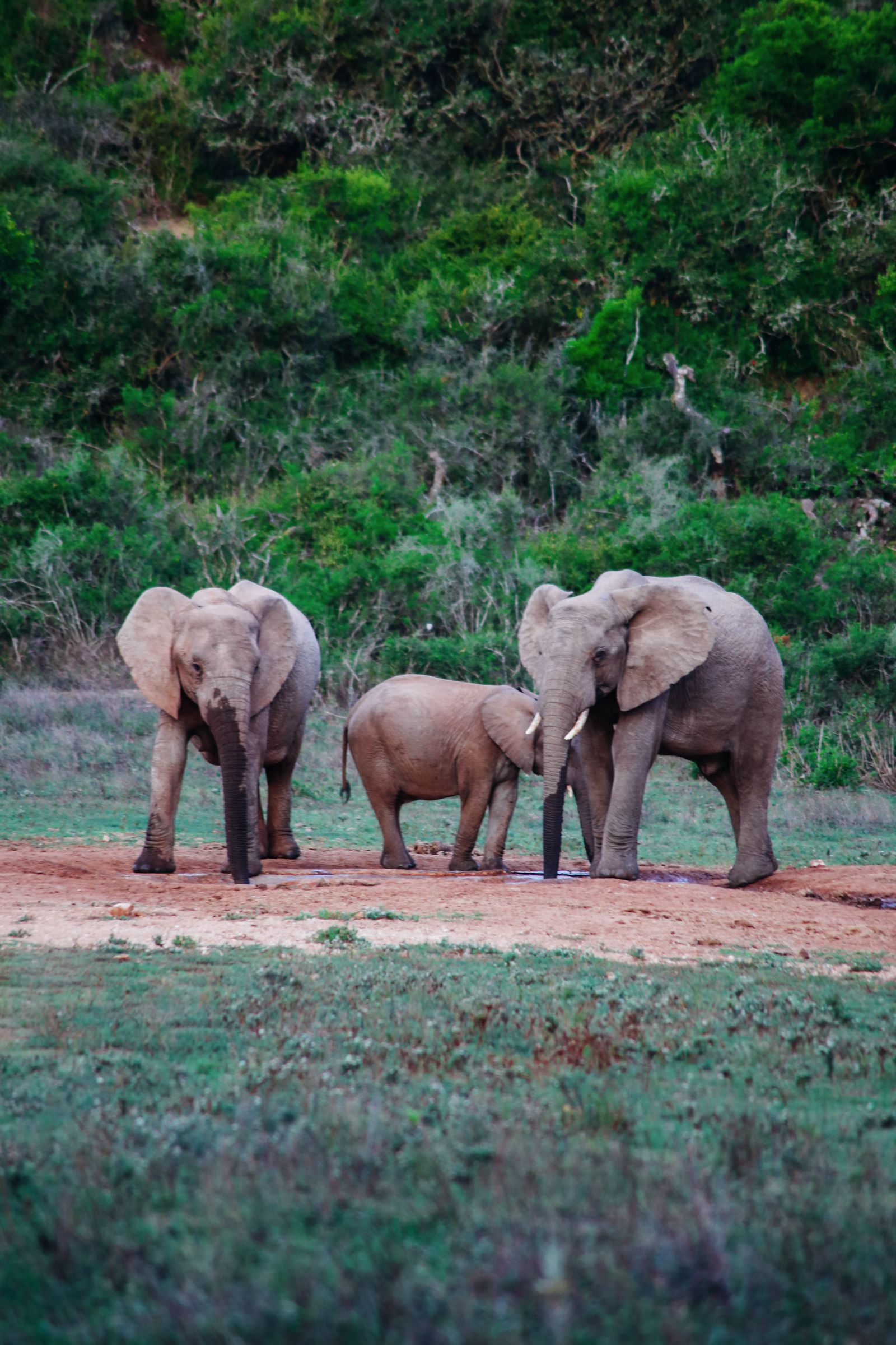 An Afternoon In Addo Elephant Park - A South African Must-Do! (43)