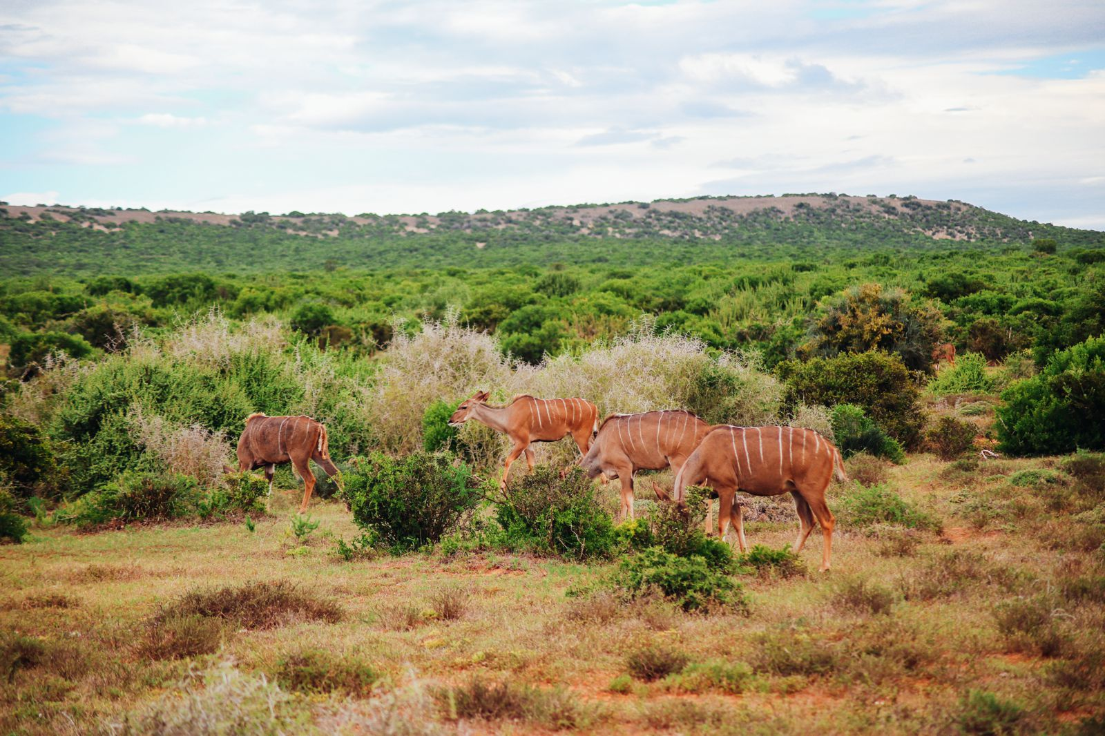 The Last 24 Hours In South Africa's Eastern Cape, Port Elizabeth, Addo National Park (19)