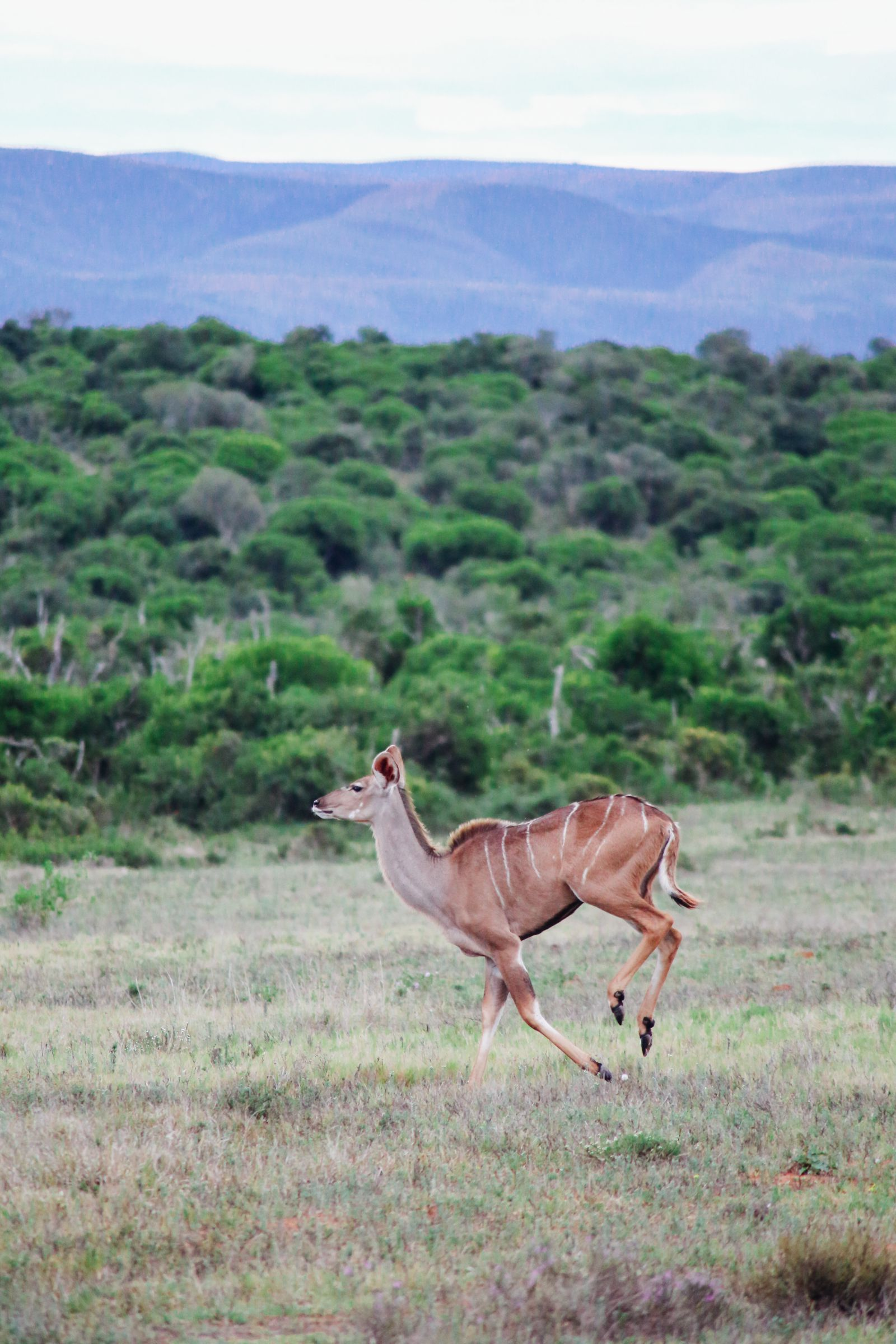 The Last 24 Hours In South Africa's Eastern Cape, Port Elizabeth, Addo National Park (28)